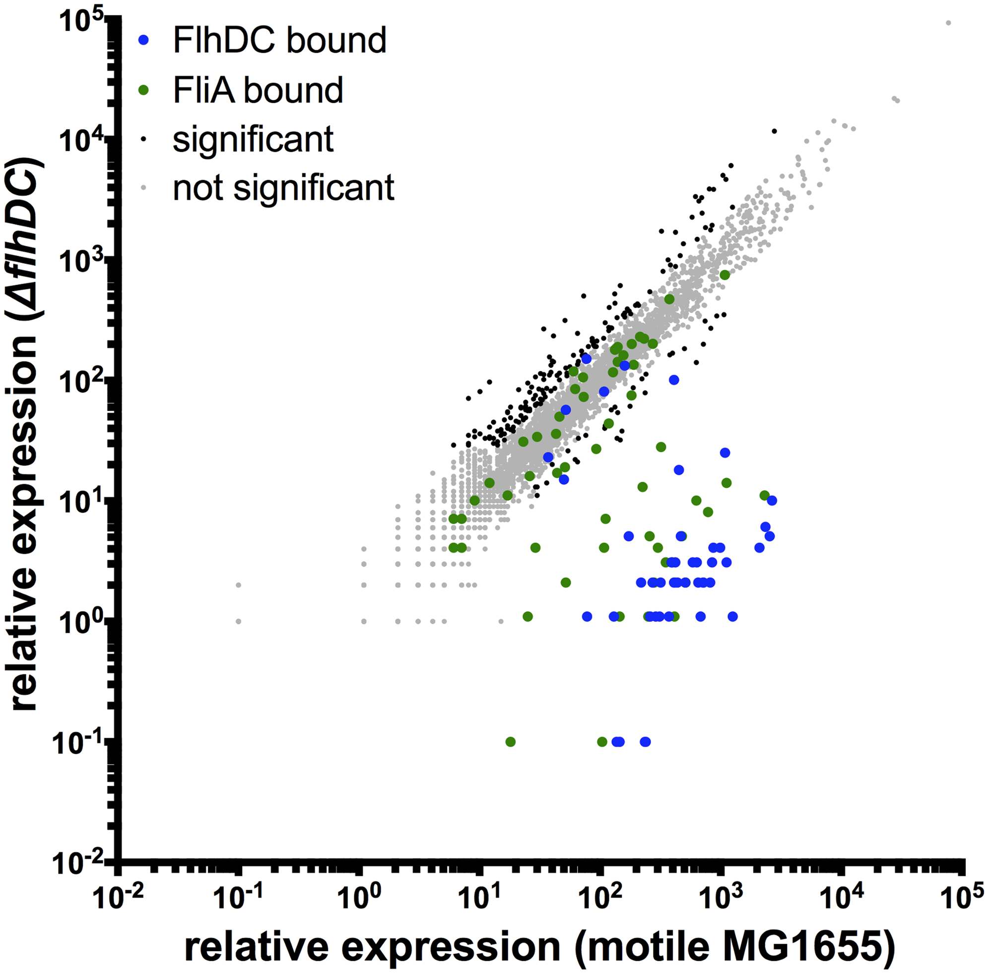 Genome-wide FlhDC-dependent gene expression.