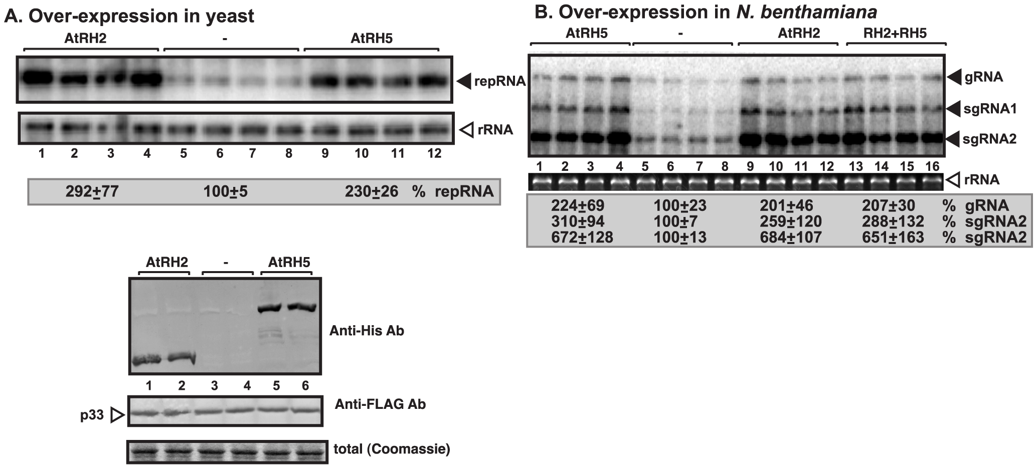 Stimulation of tombusvirus RNA accumulation by over-expression of the eIF4IIIA-like AtRH2 and the DDX5-like AtRH5 DEAD-box helicases in yeast and <i>N. benthamiana</i>.