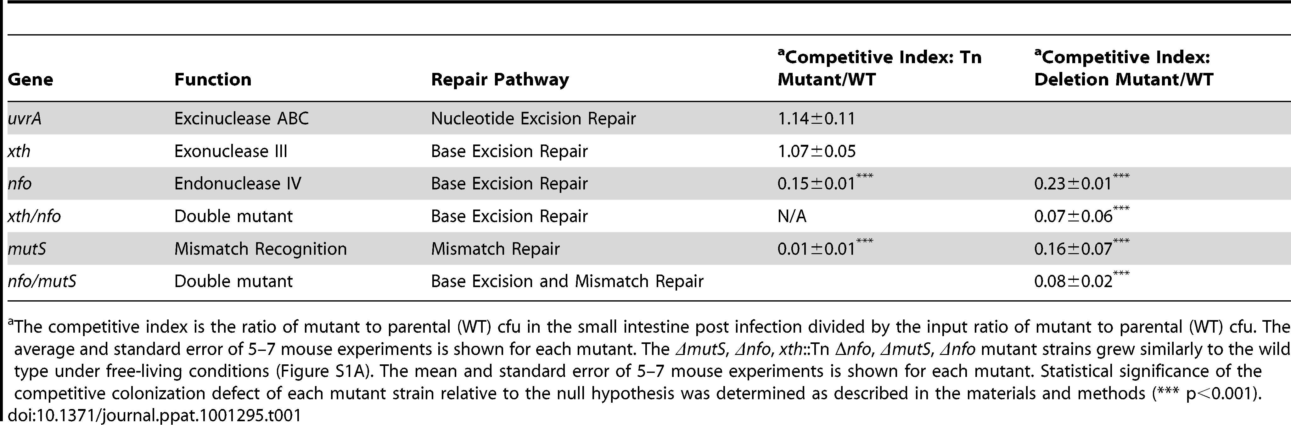 Ability of <i>V. cholerae</i> mutants defective in DNA repair pathways to colonize the infant mouse intestine in competition with the parental strain (WT).