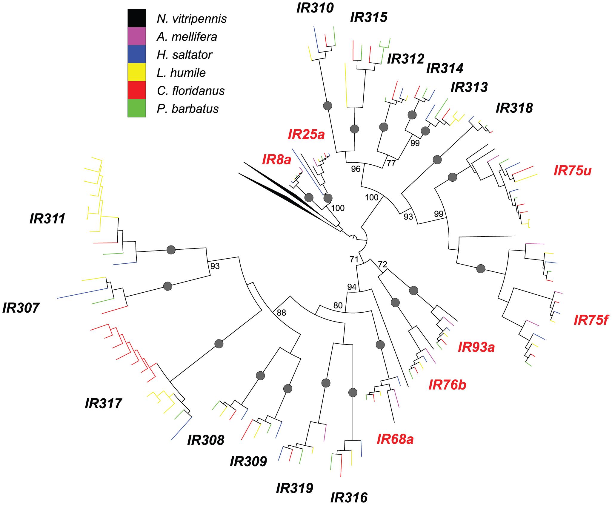 Phylogenetic relationships of Hymenoptera <i>Ir</i> genes.