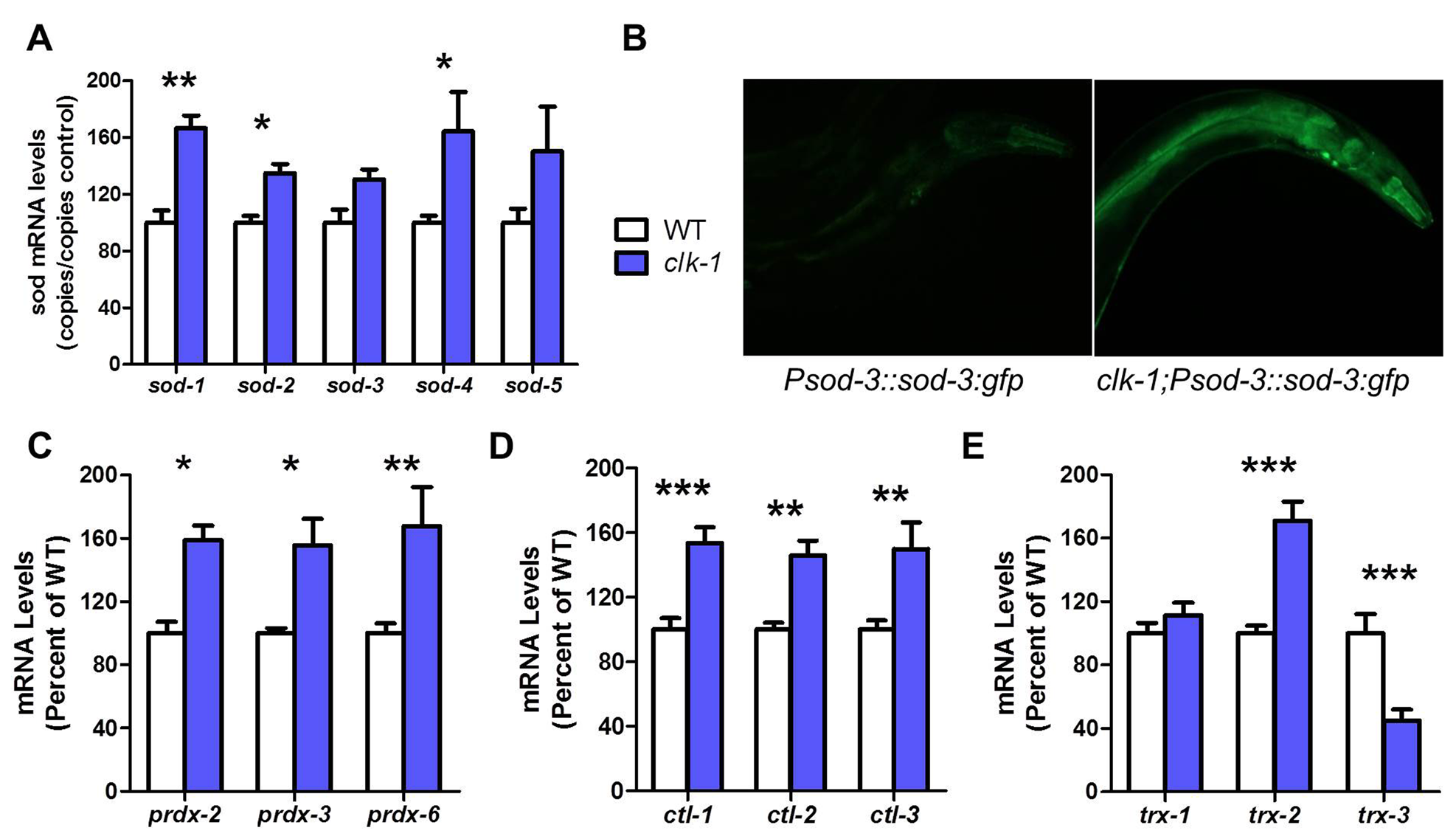 <i>clk-1</i> worms have increased antioxidant defenses.