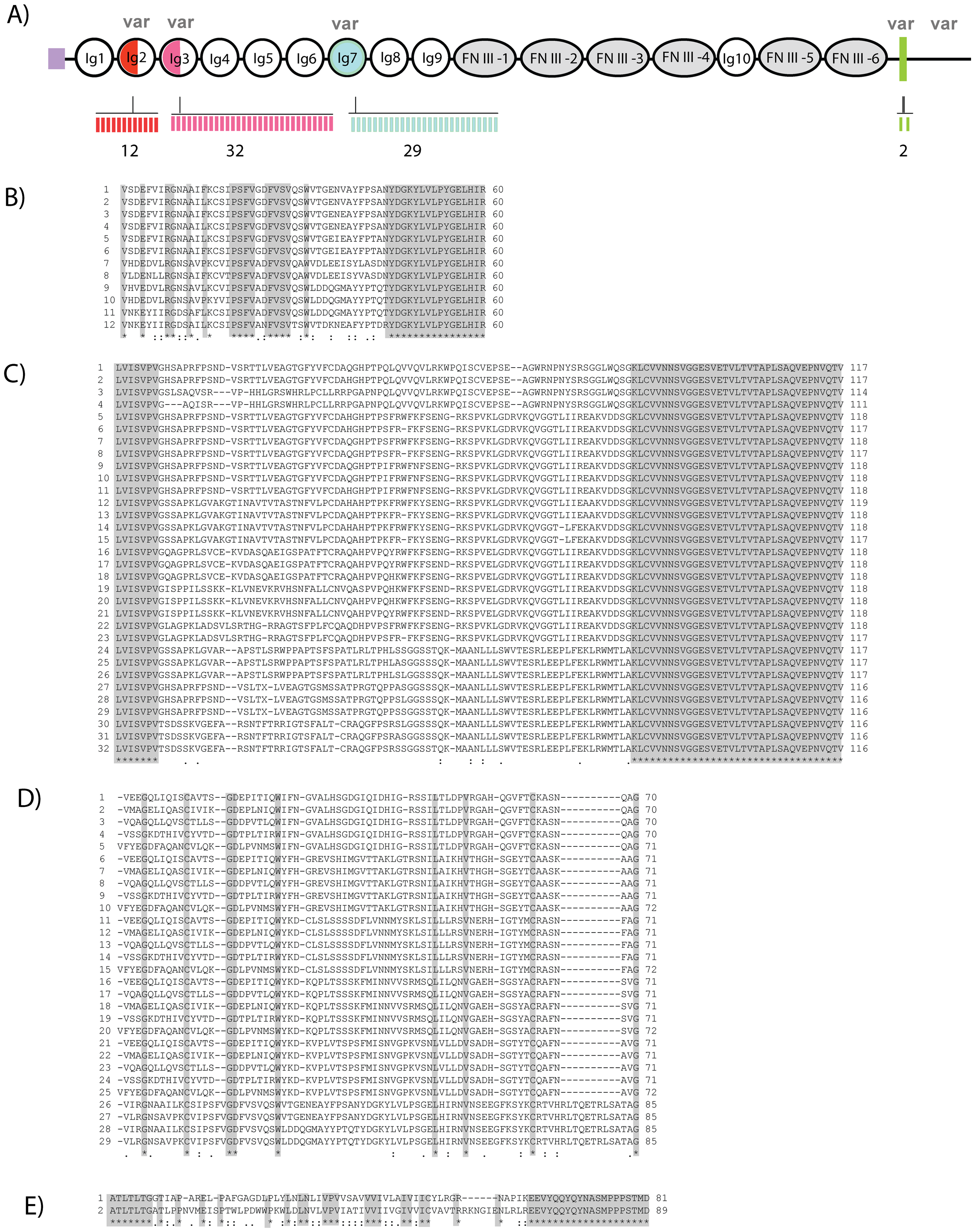 High diversity regions of Dscam in freshwater crayfish.