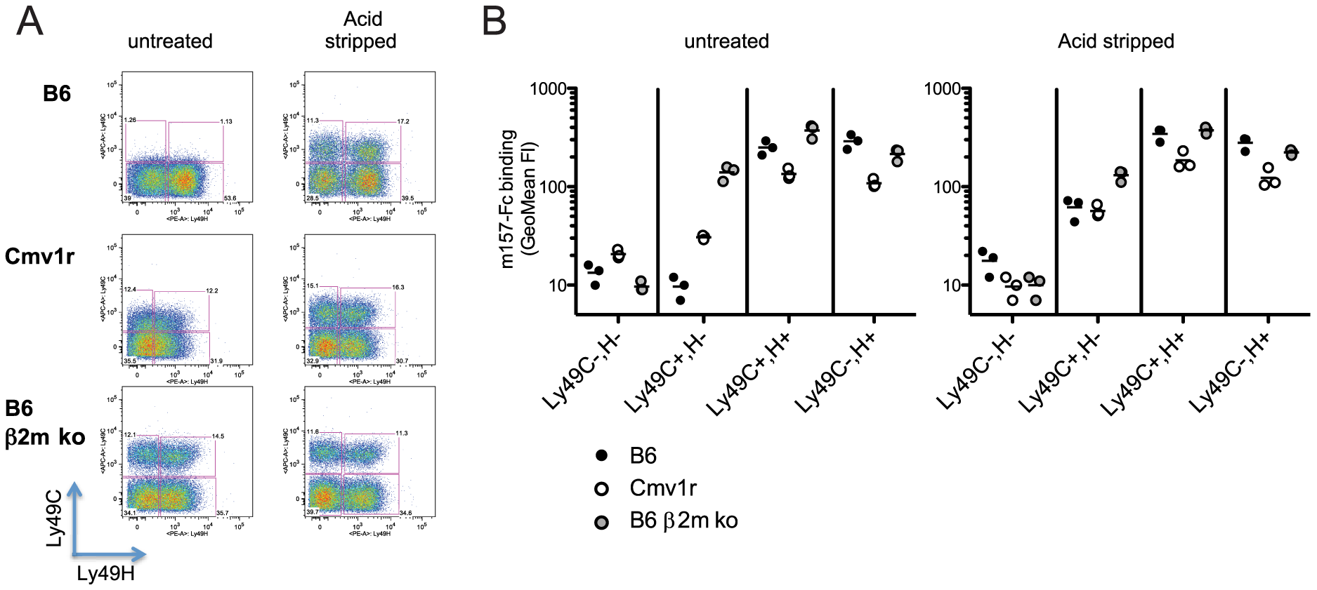 Binding of m157<sup>G1F</sup> to NK cells isolated from various mouse strains.