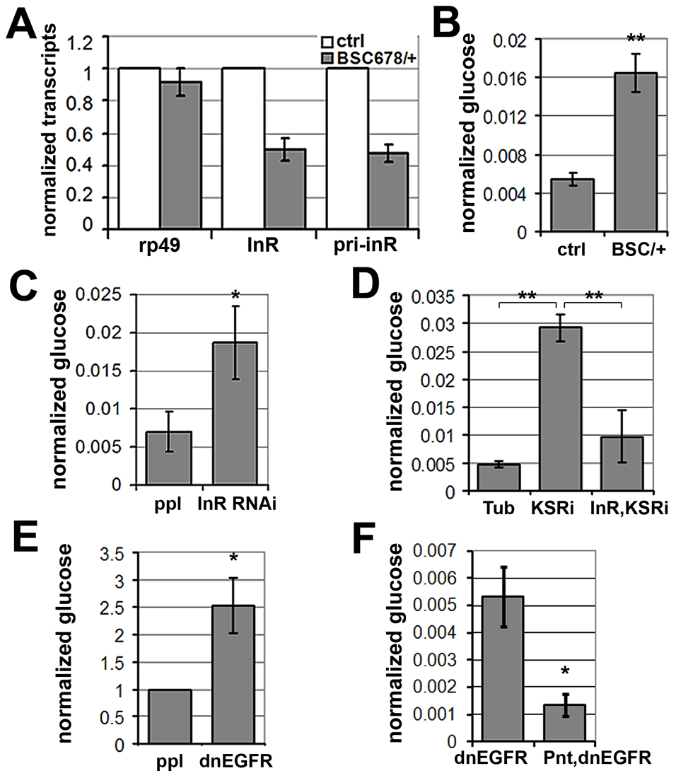 MAPK/ERK regulates <i>inr</i> expression to control circulating glucose levels.
