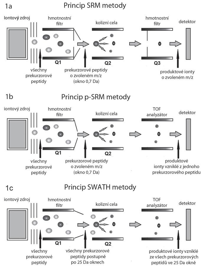 Schéma hmotnostních spektrometrů pracujících v režimech SRM, p-SRM a SWATH/HRM. Peptidy jsou separovány kapalinovou chromatografií, odkud vstupují do iontového zdroje, kde jsou účinkem vysokého napětí ionizovány. Nabité peptidy pokračují do hmotnostního spektrometru. A. V SRM metodě filtruje kvadrupól Q1 pouze vybrané prekurzorové ionty (peptidy) o zvoleném poměru hmotnost/náboj (m/z), které pak pokračují do kolizní cely (Q2), kde jsou fragmentovány za vzniku produktových iontů (specifických peptidových fragmentů). Kvadrupól Q3, podobně jako Q1, zde funguje na principu hmotnostního filtru a propouští na detektor jen vybrané produktové ionty. B. Metoda p-SRM se od SRM v principu liší v posledním hmotnostním analyzátoru, kterým je analyzátor doby letu (time-of-fl ight – TOF). Zde dochází k analýze všech vzniklých produktových iontů na základě doby průletu k detektoru, nikoli jen vybraných. C. V případě metody SWATH/HRM kvadrupól Q1 postupně propouští do kolizní cely nikoliv jednotlivé prekurzorové ionty (peptidy), ale soubory peptidů spadajících do oblasti m/z (SWATH okna) o šířce typicky 25 Da. Všechny propuštěné ionty jsou pak fragmentovány v kolizní cele (Q2) a analyzovány pomocí analyzátoru doby letu (TOF).