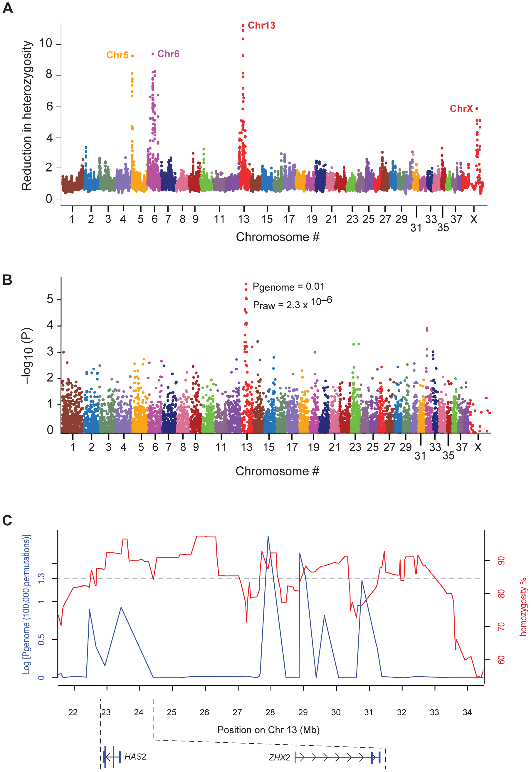 The association with Shar-Pei Fever susceptibility and the strongest selective sweep signal co-localize on chromosome 13.