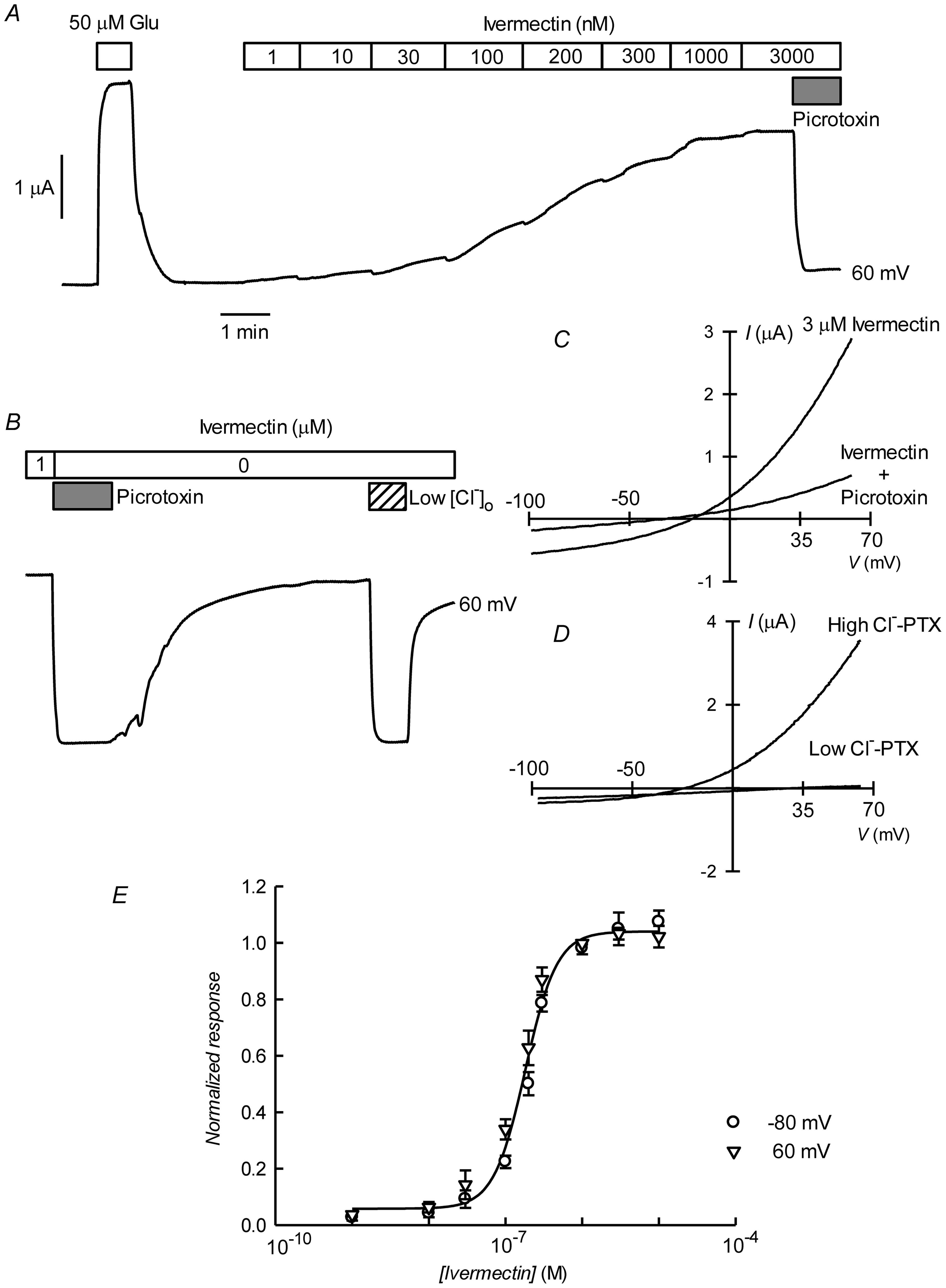 Irreversible activation of CrGluClα by ivermectin.