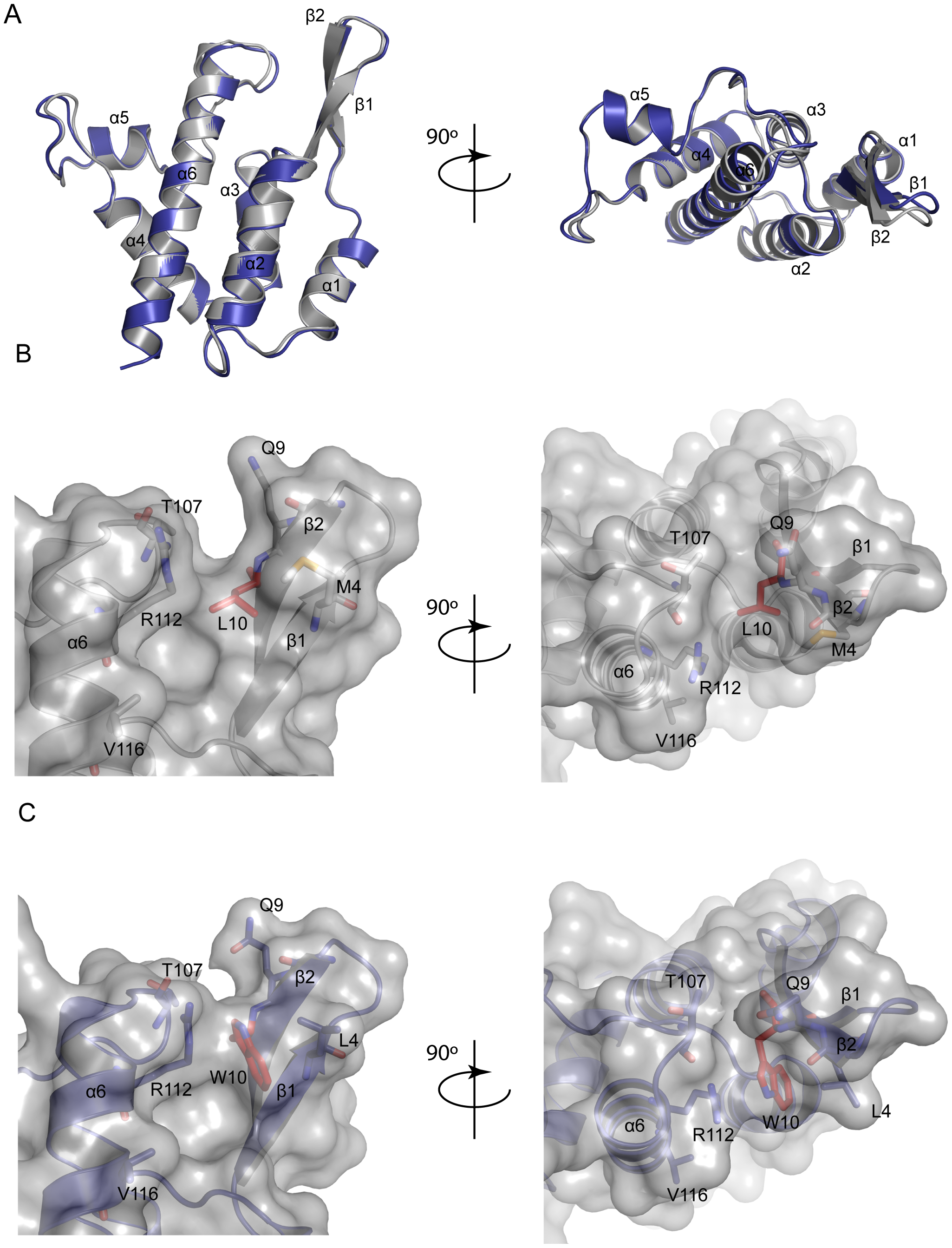 Structure of MLV CA-NtD (L10W).