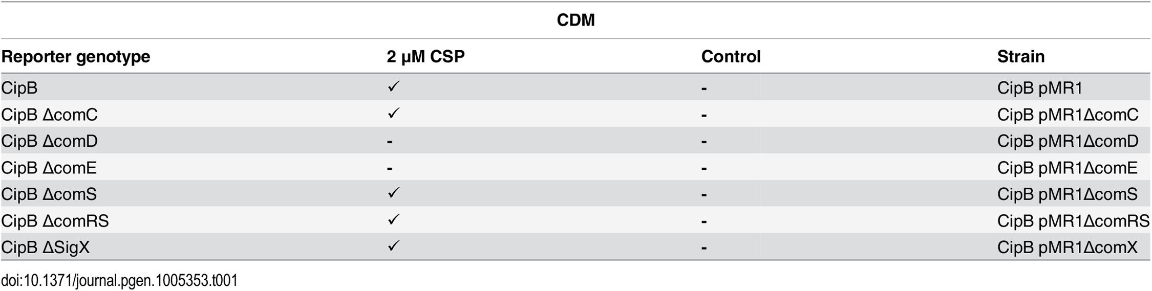 Expression of <i>cipB</i> in different gene deletion background in CDM under CSP induced conditions.