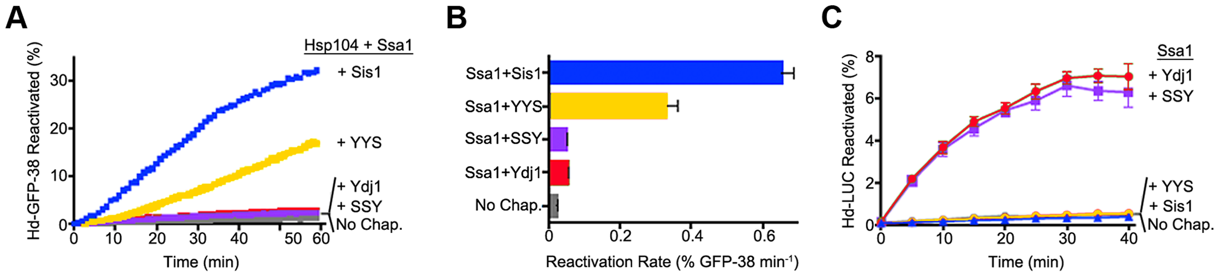 Function of Sis1, Ydj1 and Sis1-Ydj1 hybrid proteins in protein reactivation in vitro.