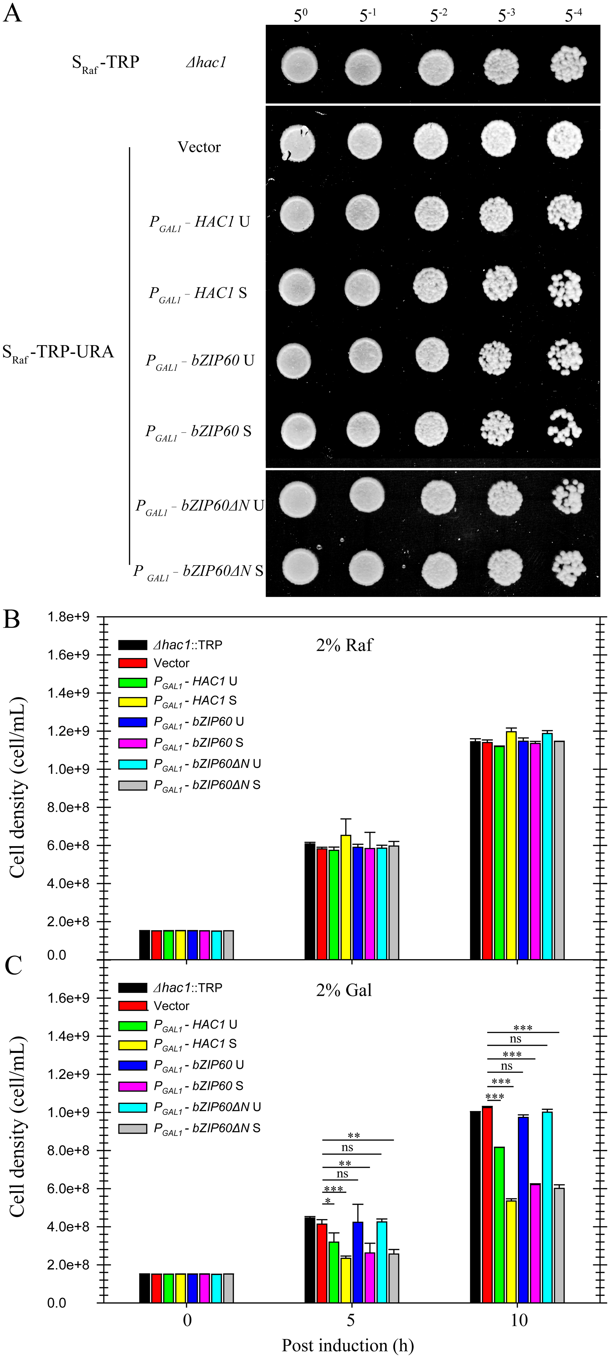 Effects of constitutive expression of <i>HAC1</i> and <i>bZIP60</i> on yeast growth.