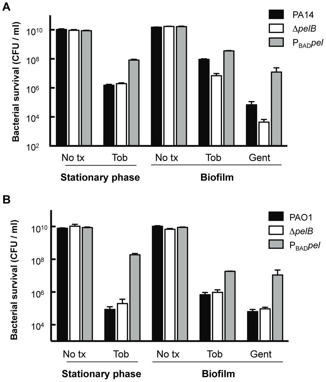 Analysis of Pel-mediated antibiotic resistance to stationary phase planktonic and biofilm grown cells.
