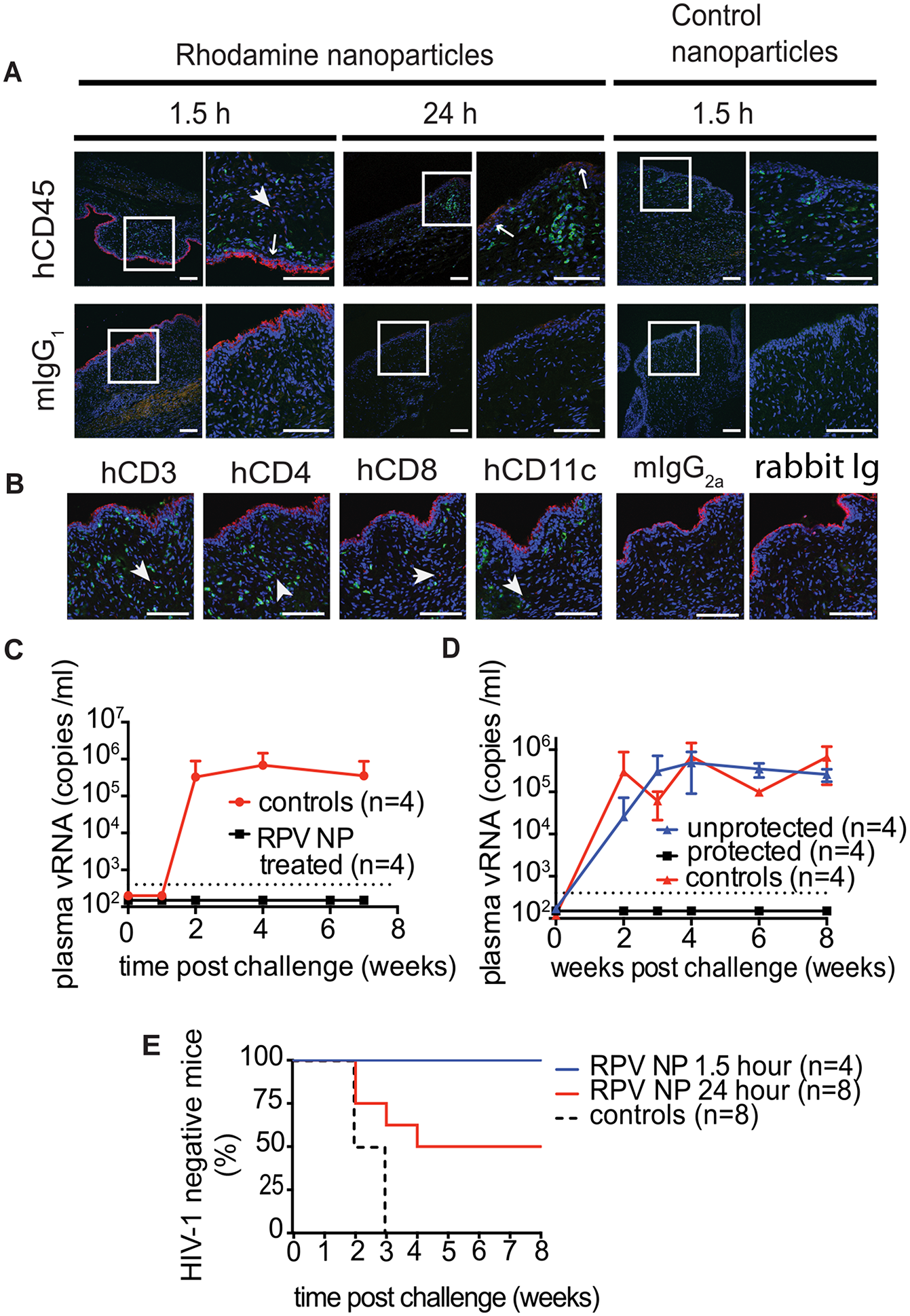 Distribution of rhodamine-labeled NPs in thermosensitive gel in the mouse female reproductive tract (FRT) and the ability of PLGA/RPV to offer pericoital protection against HIV-1 transmission.