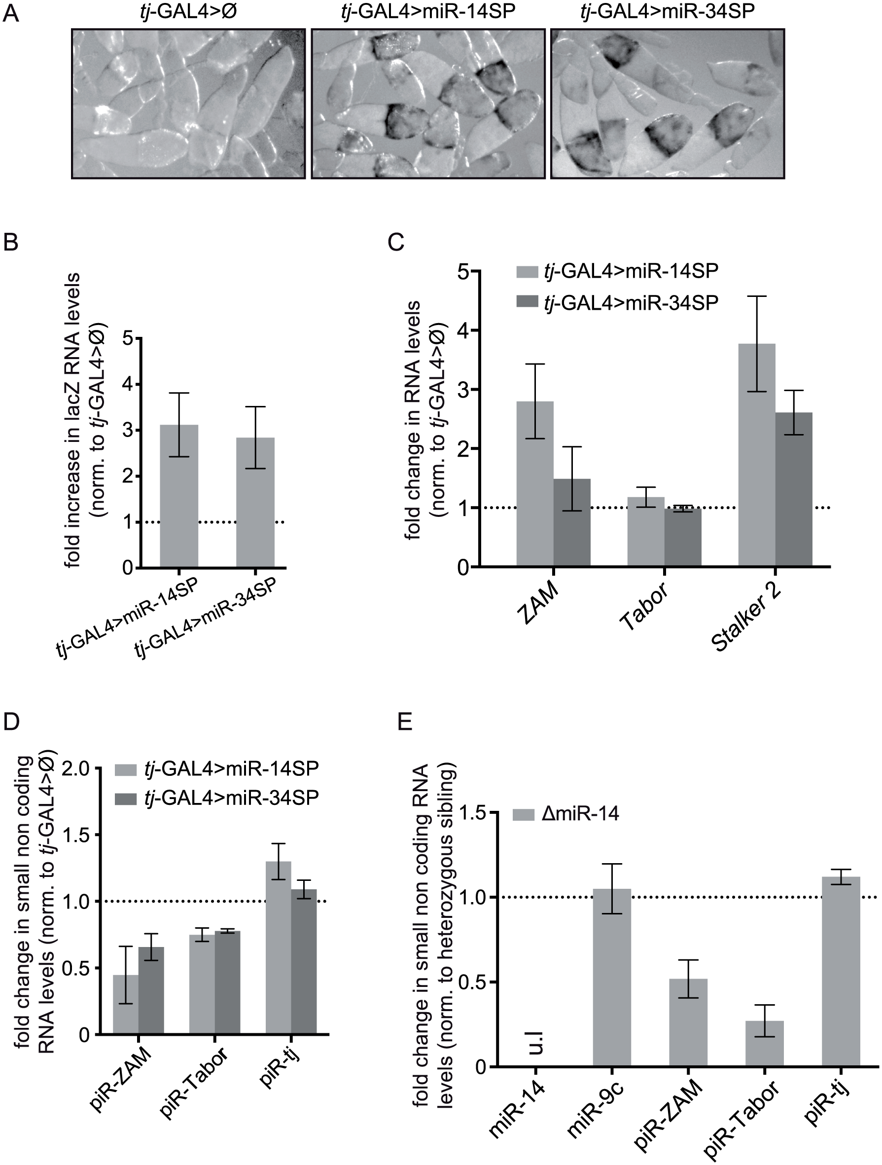 miRNA screen and genetic validation of the requirement of miR-14 for TE repression.