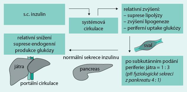 Schéma 1. Distribuce exogenního inzulinu