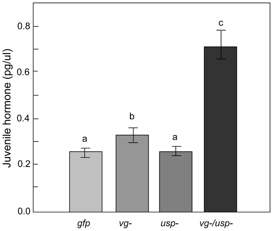 Gene knockdown effect on hemolymph JH titer.