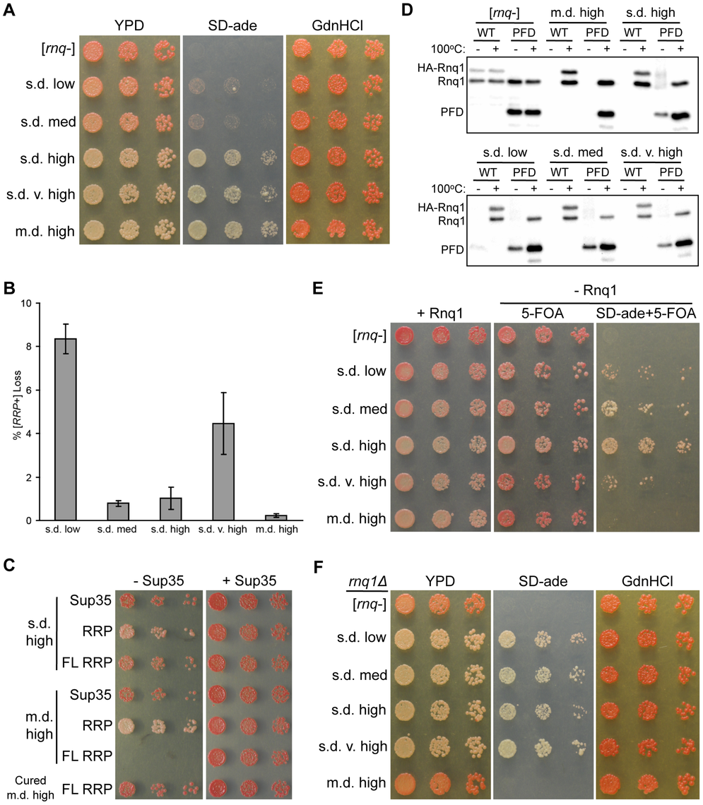 The non-prion forming domain of Rnq1 shows variant-specific influence on fiber growth.