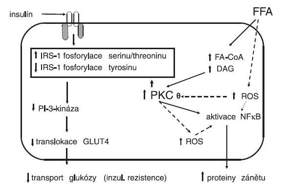 Vliv volných mastných kyselin na vývoj inzulínové rezistence a současně na aktivaci zánětlivé reakce a oxidačního stresu v cílové buňce pro působení inzulínu (upraveno podle Boden & Laakso, Diabetes Care 2004; 27: 2253–2259)
