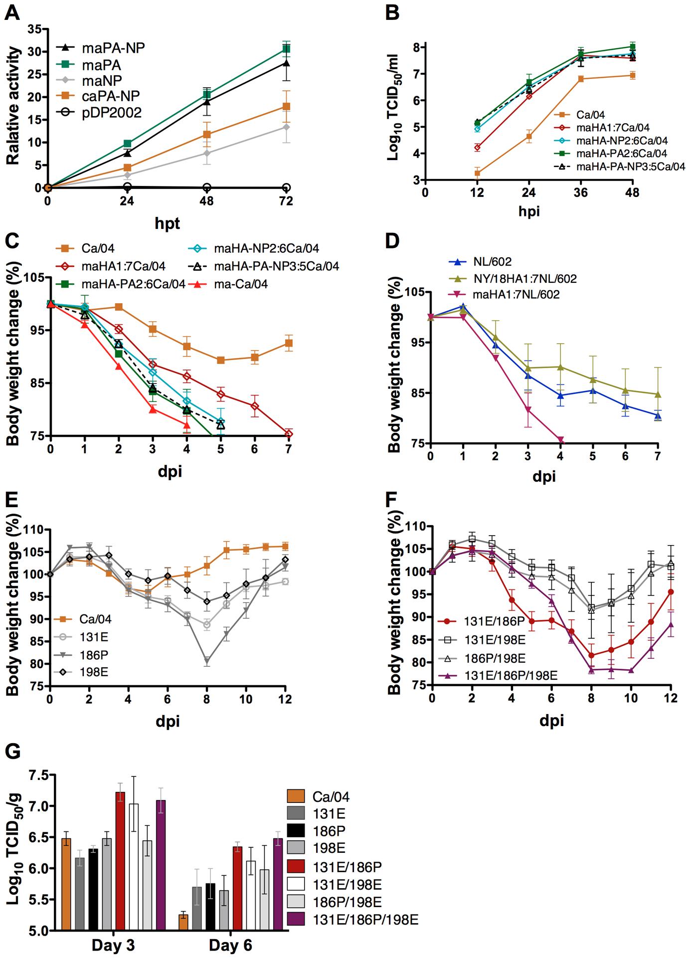 Effects of amino acid mutations for virulence of ma-Ca/04.