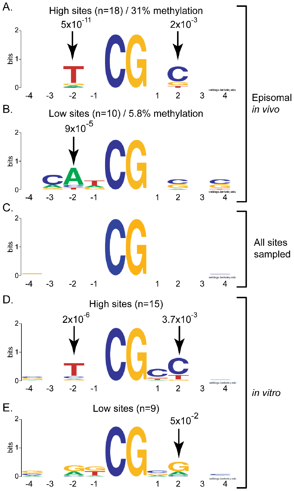 DNMT3A shows selectivity for residues flanking the target CpG site at positions −2 and +2.
