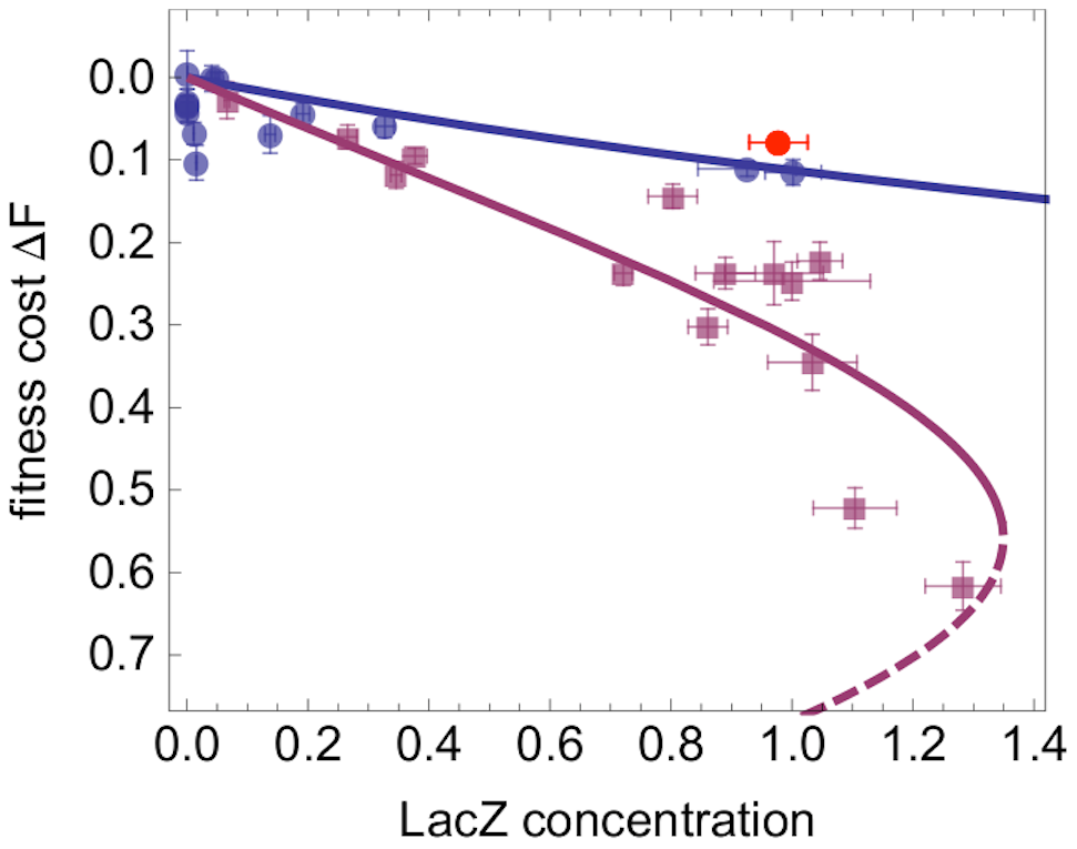 Fitness of <i>lac</i> regulatory mutants in different environments.