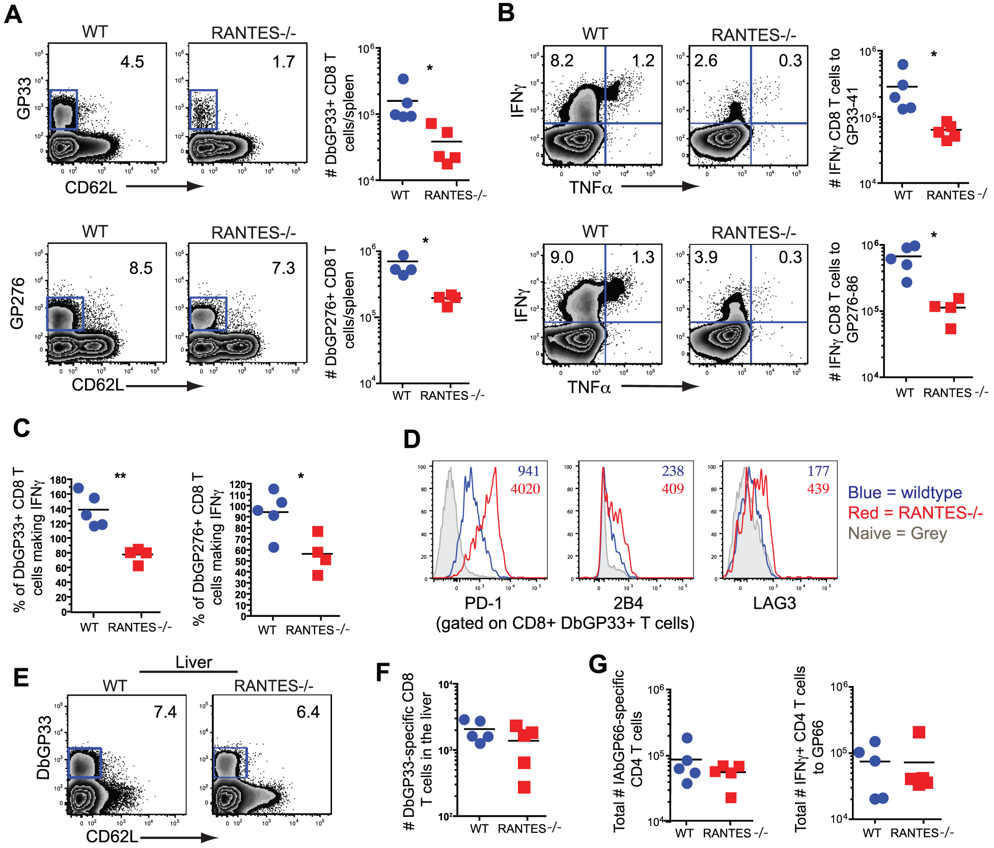 CD8 T cell responses are significantly reduced in RANTES<sup>−/−</sup>mice one month p.i.