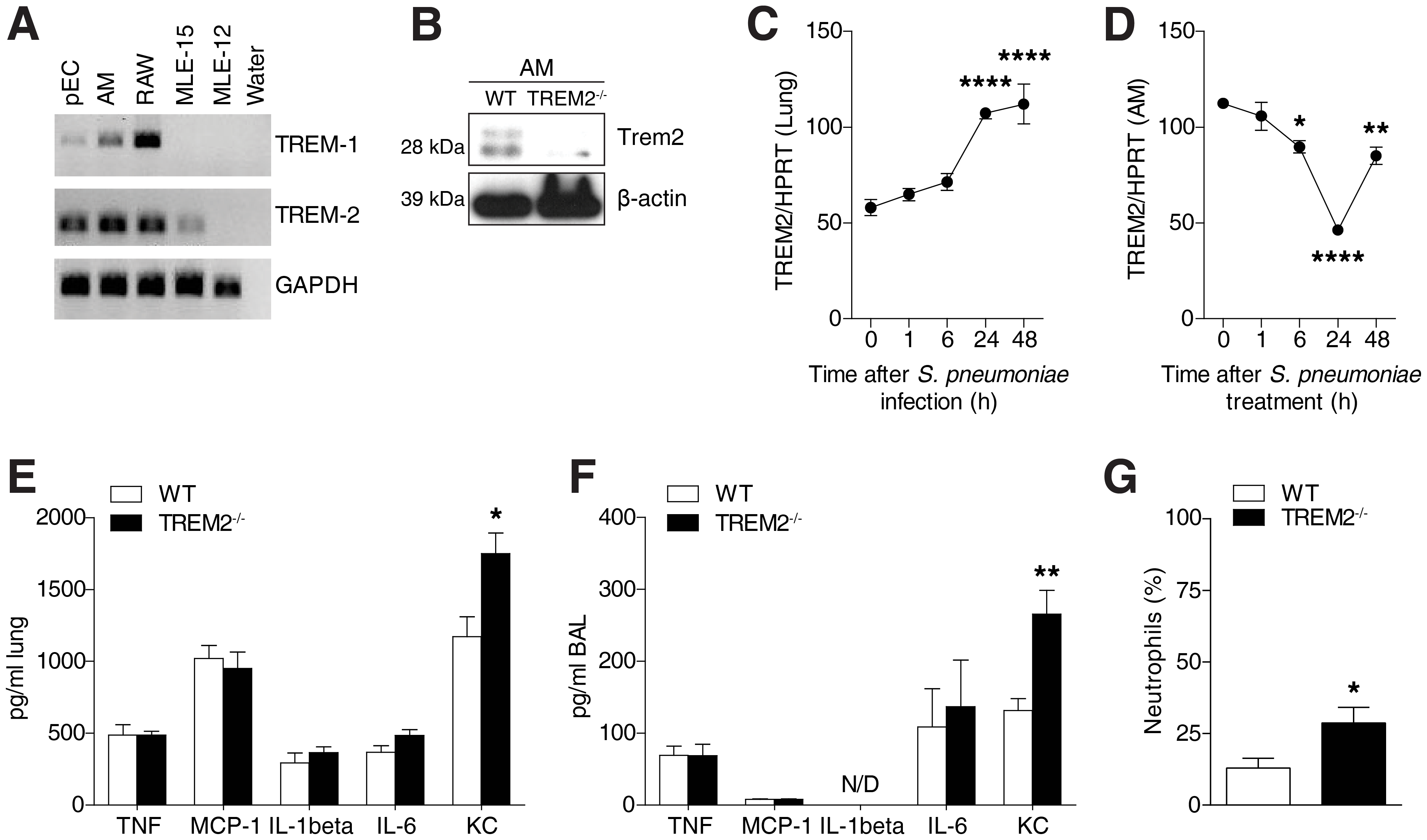 Pulmonary TREM-2 expression and function during <i>S. pneumoniae</i> induced inflammation.
