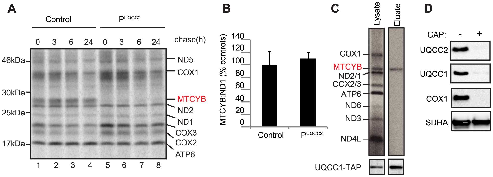 UQCC2 and UQCC1 are involved in cytochrome <i>b</i> translation and/or stability.