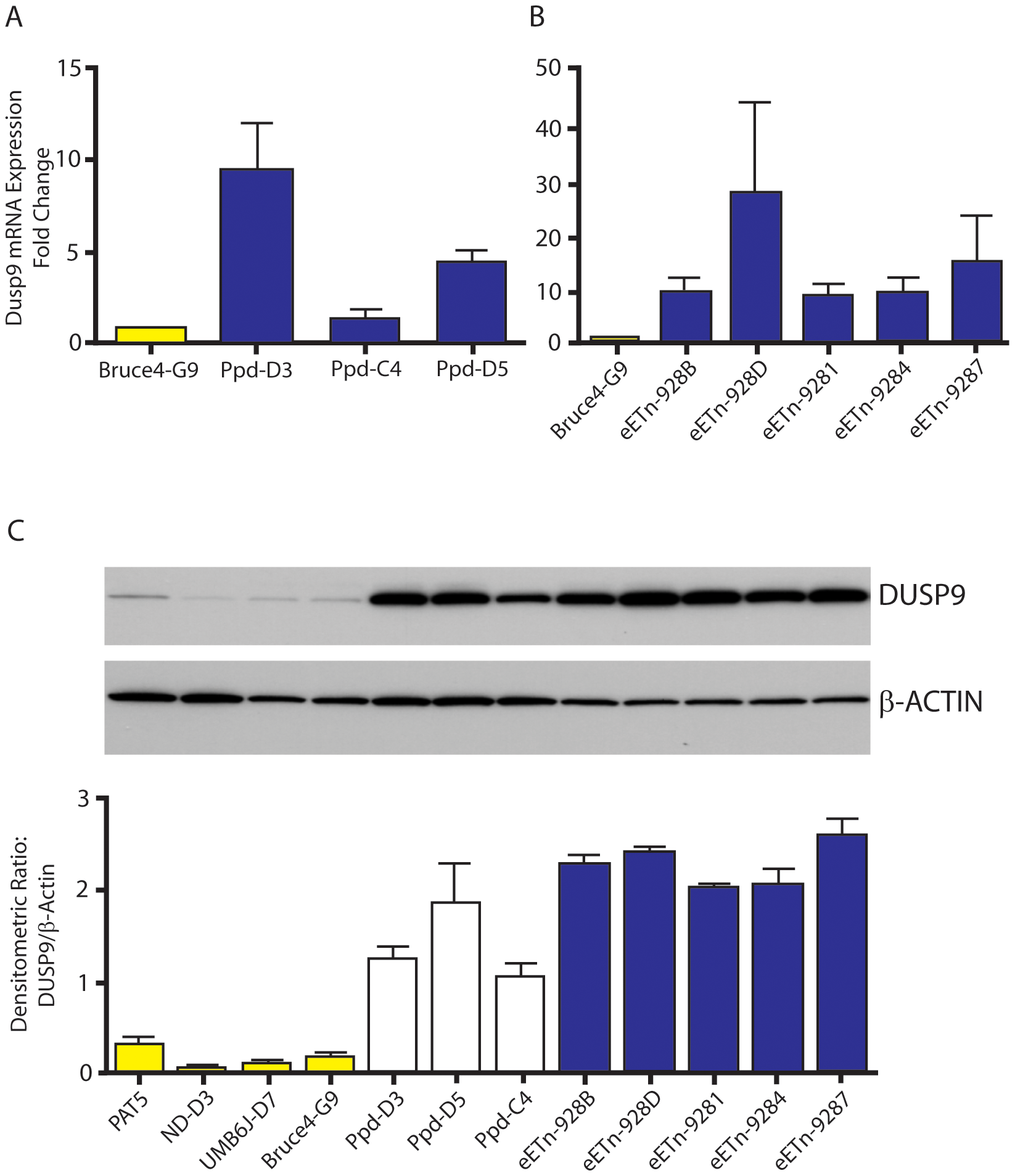 <i>Dusp9</i> mRNA and protein are increased in mutant ES cells.