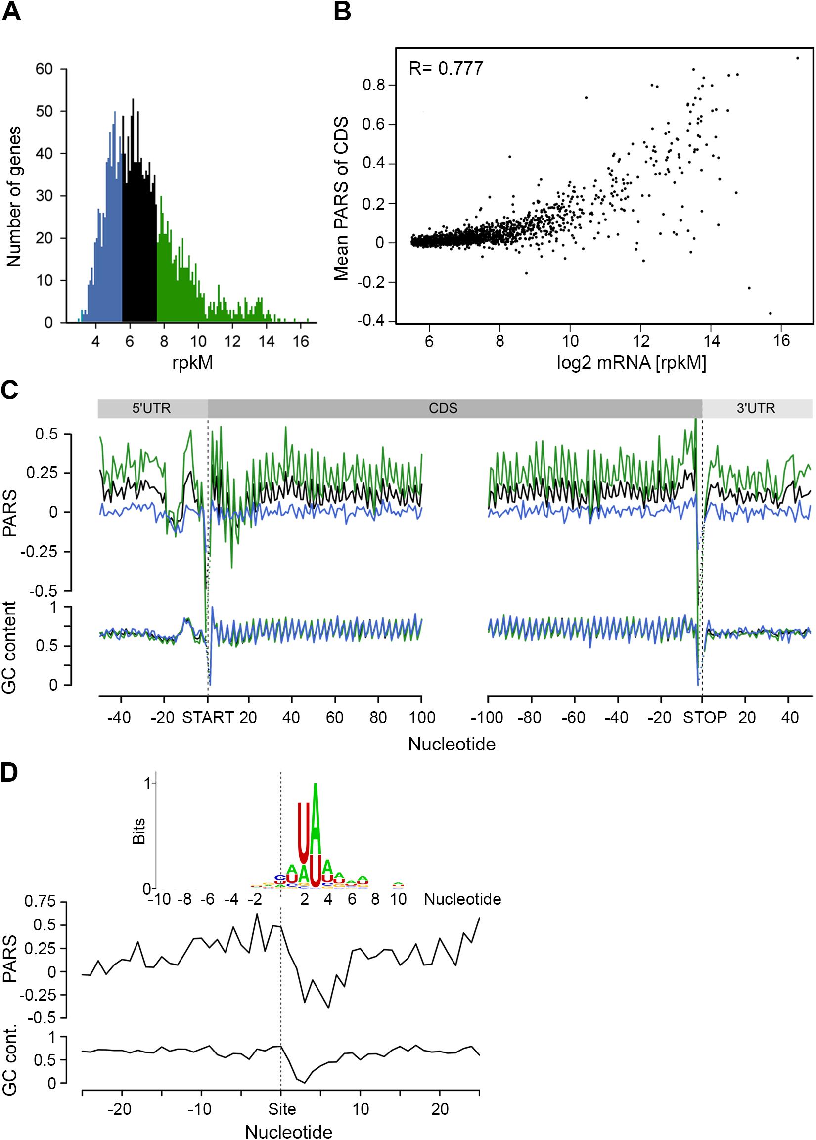 mRNA structure correlates with mRNA abundance.