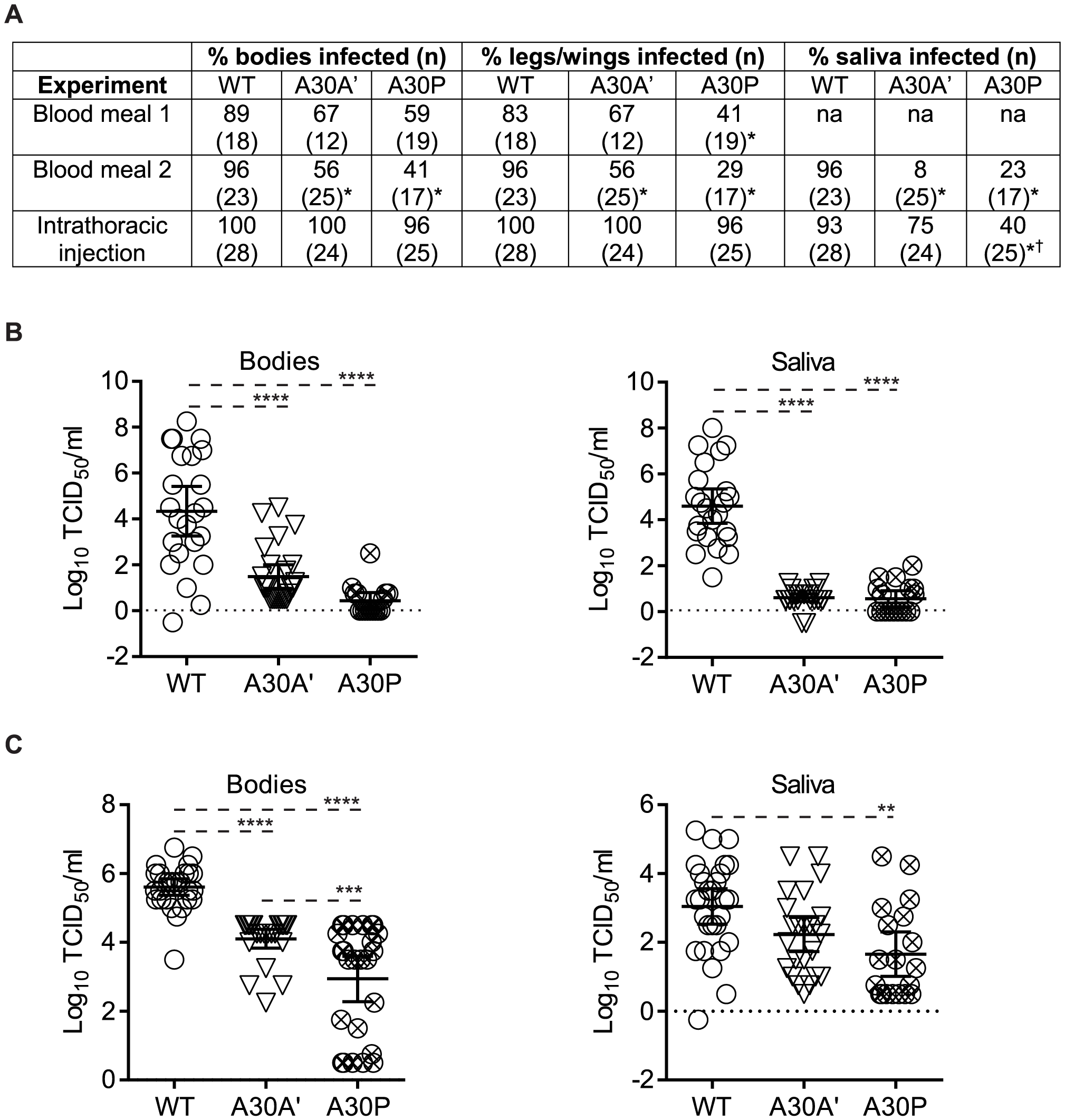 PRF/NS1′-deficient WNV<sub>KUN</sub> mutants show reduced replication and dissemination in <i>Culex annulirostris</i> mosquitoes.