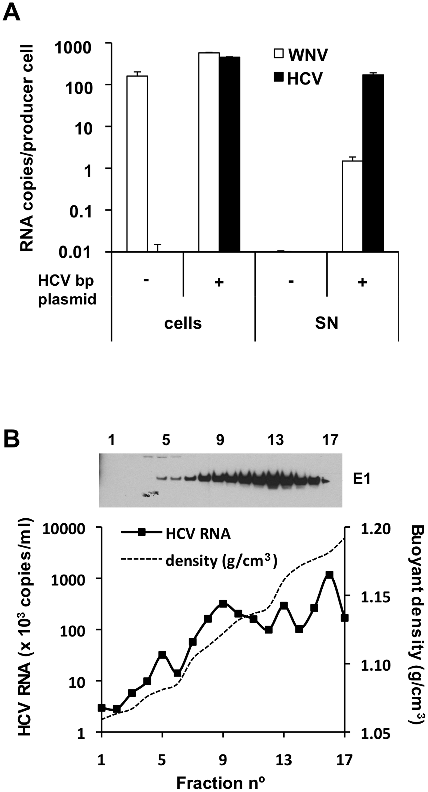 HCV RNA is preferentially associated with in HCV bicistronic particles released by BHK-WNV cells.
