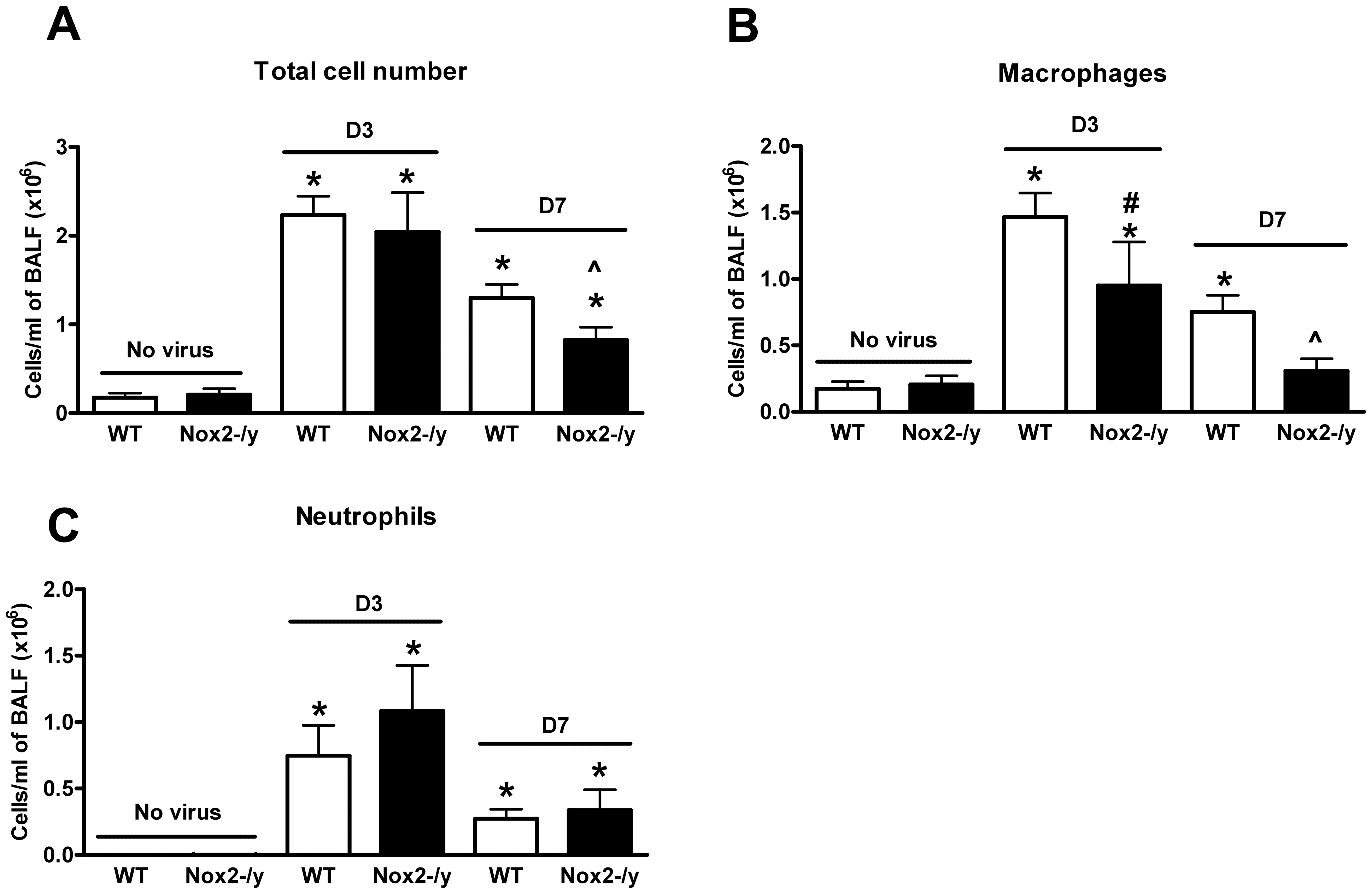 Effect of H3N2 (X-31) influenza A virus infection on BALF cellularity in wild type (WT) and Nox2<sup>−/y</sup> mice.