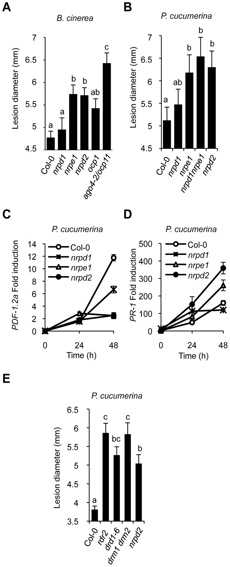 Comparative immune responses of RdDM mutants to inoculation with <i>B. cinerea</i> and <i>P. cucumerina</i>.