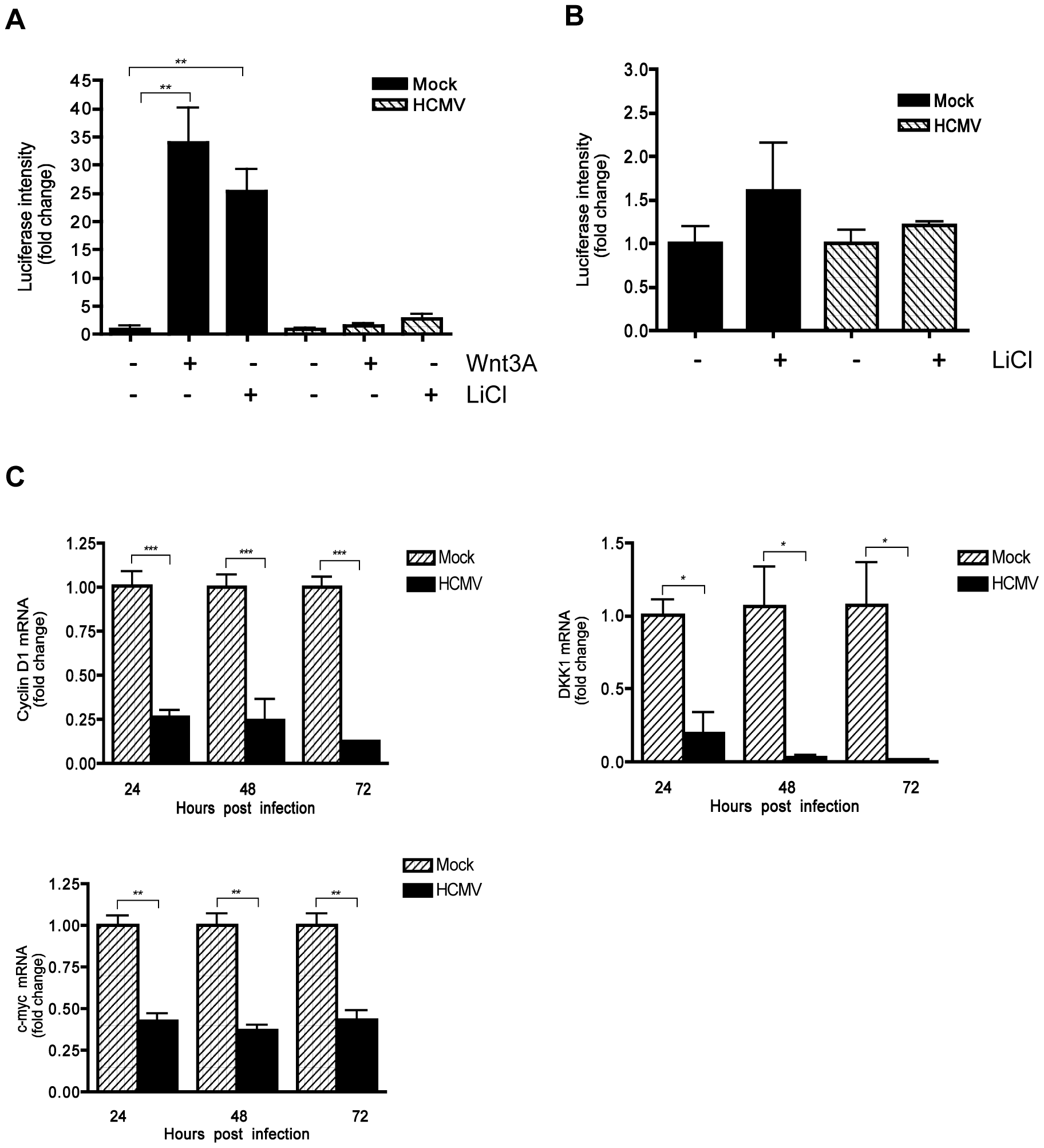 Inhibition of β-catenin transcriptional activity by HCMV.