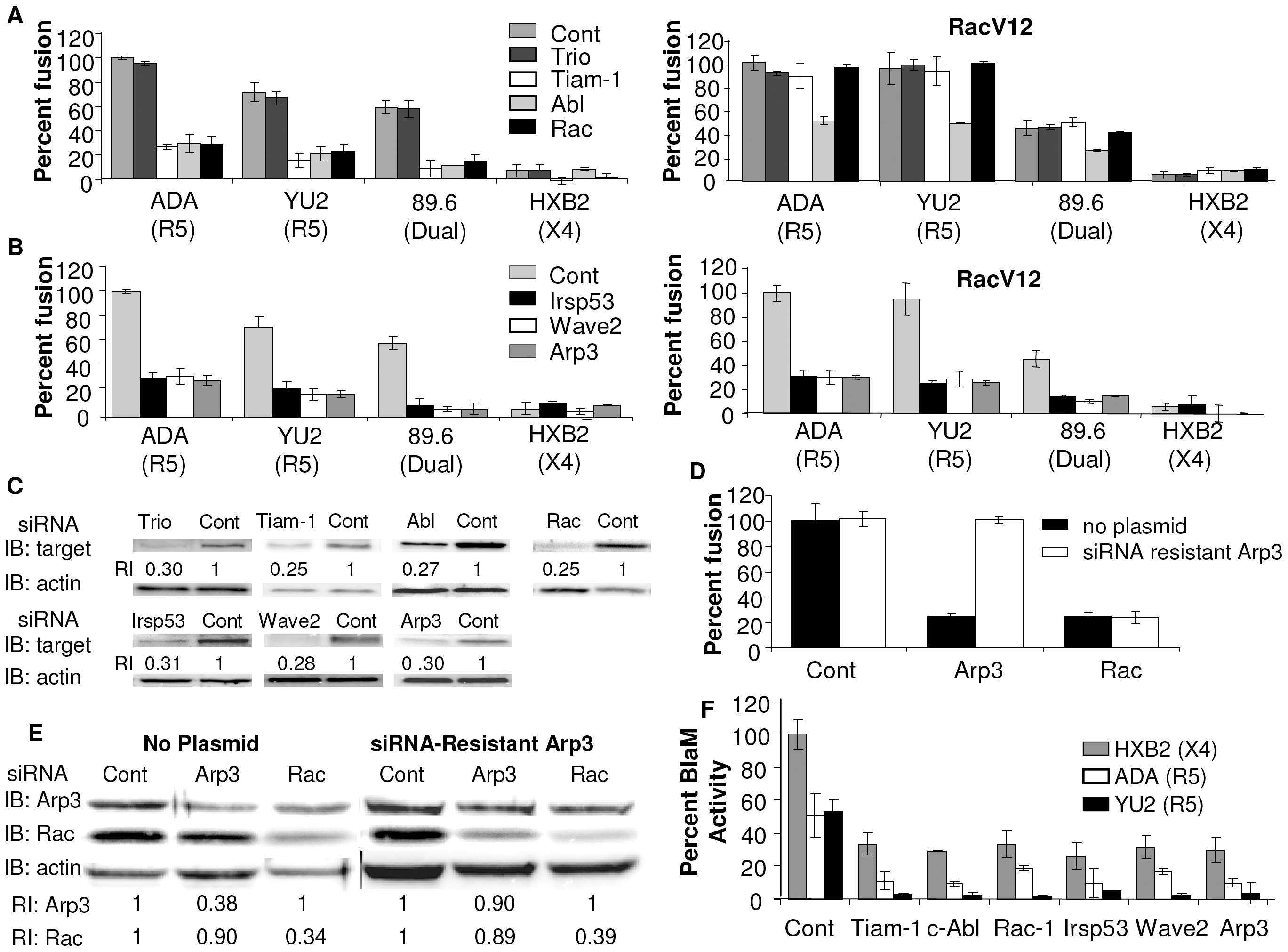 Down regulation of Wave2 signaling complex with siRNA reduces HIV-1 Env-mediated cell-cell fusion and virus-cell fusion.