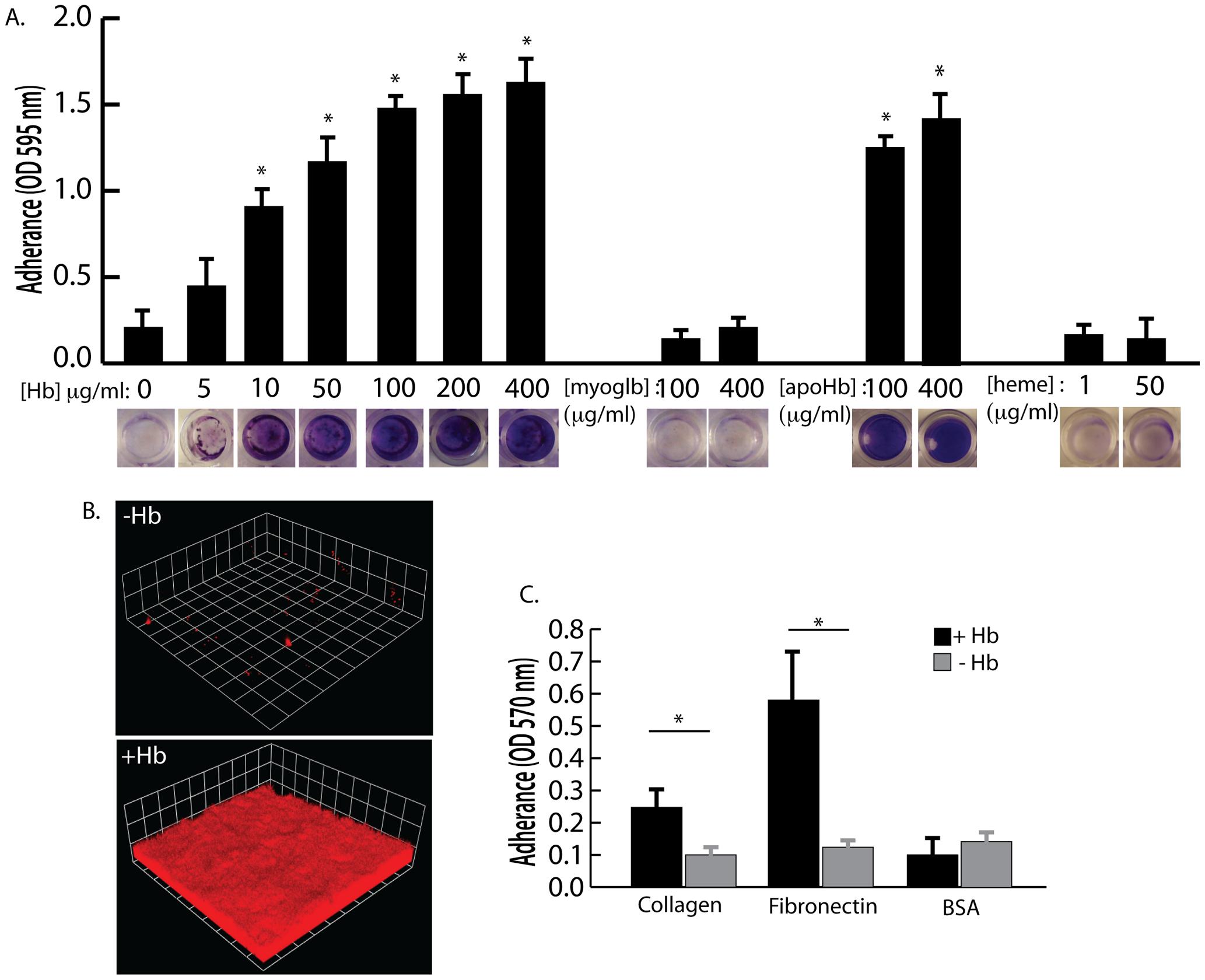 The effect of hemoglobin on <i>S. aureus</i> surface colonization.