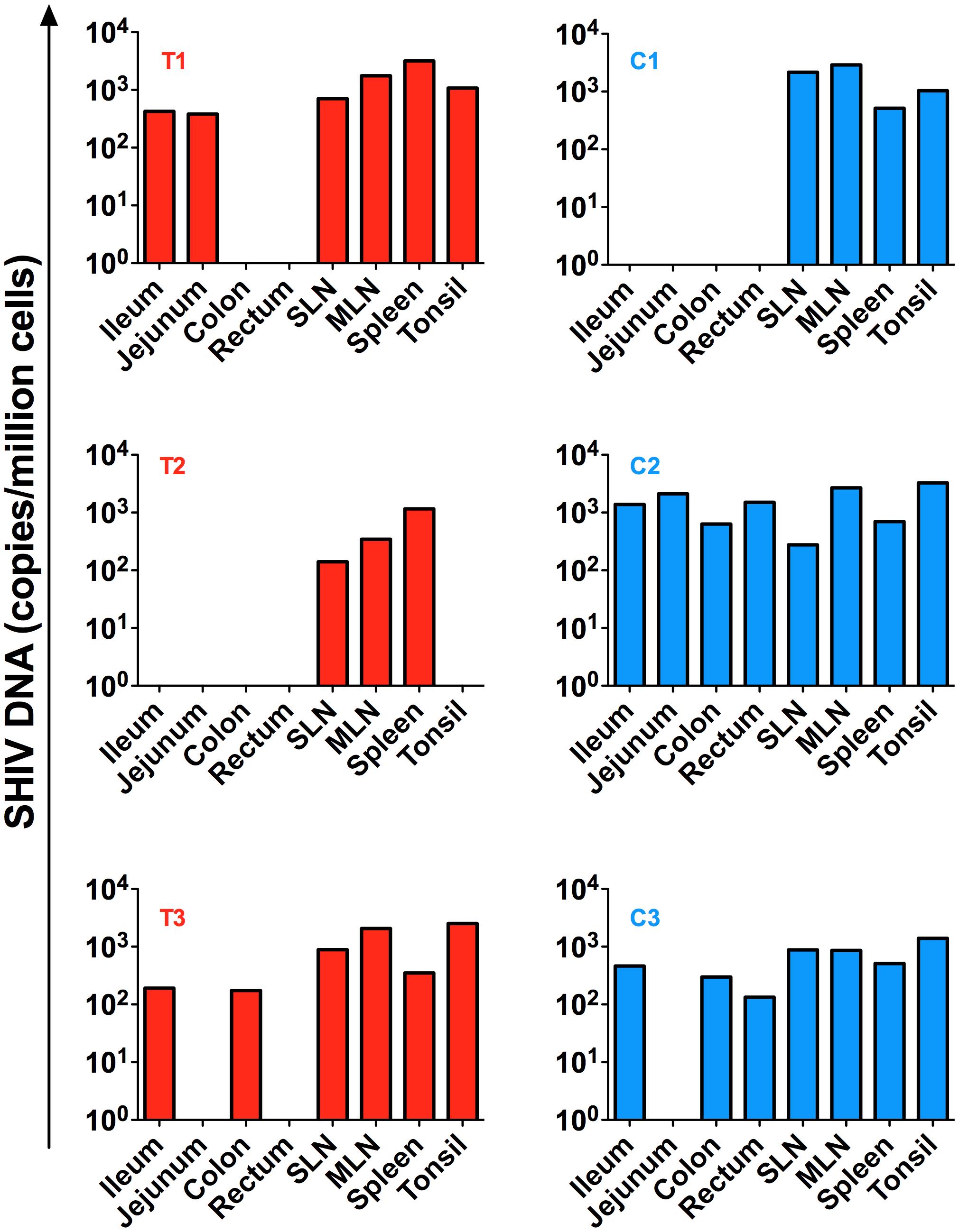 SHIV-DNA in tissues post ART interruption.