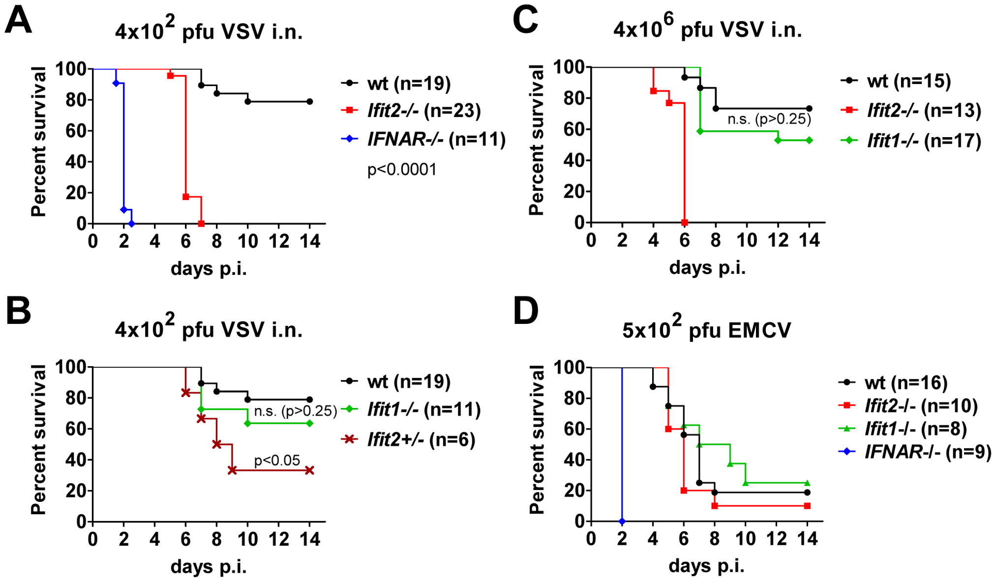 <i>Ifit2</i> protects mice from lethal intranasal VSV infection.