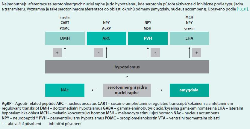Schéma 9. Schematické zobrazení serotoninergní inervace oblastí uplatňujících se v regulaci příjmu potravy