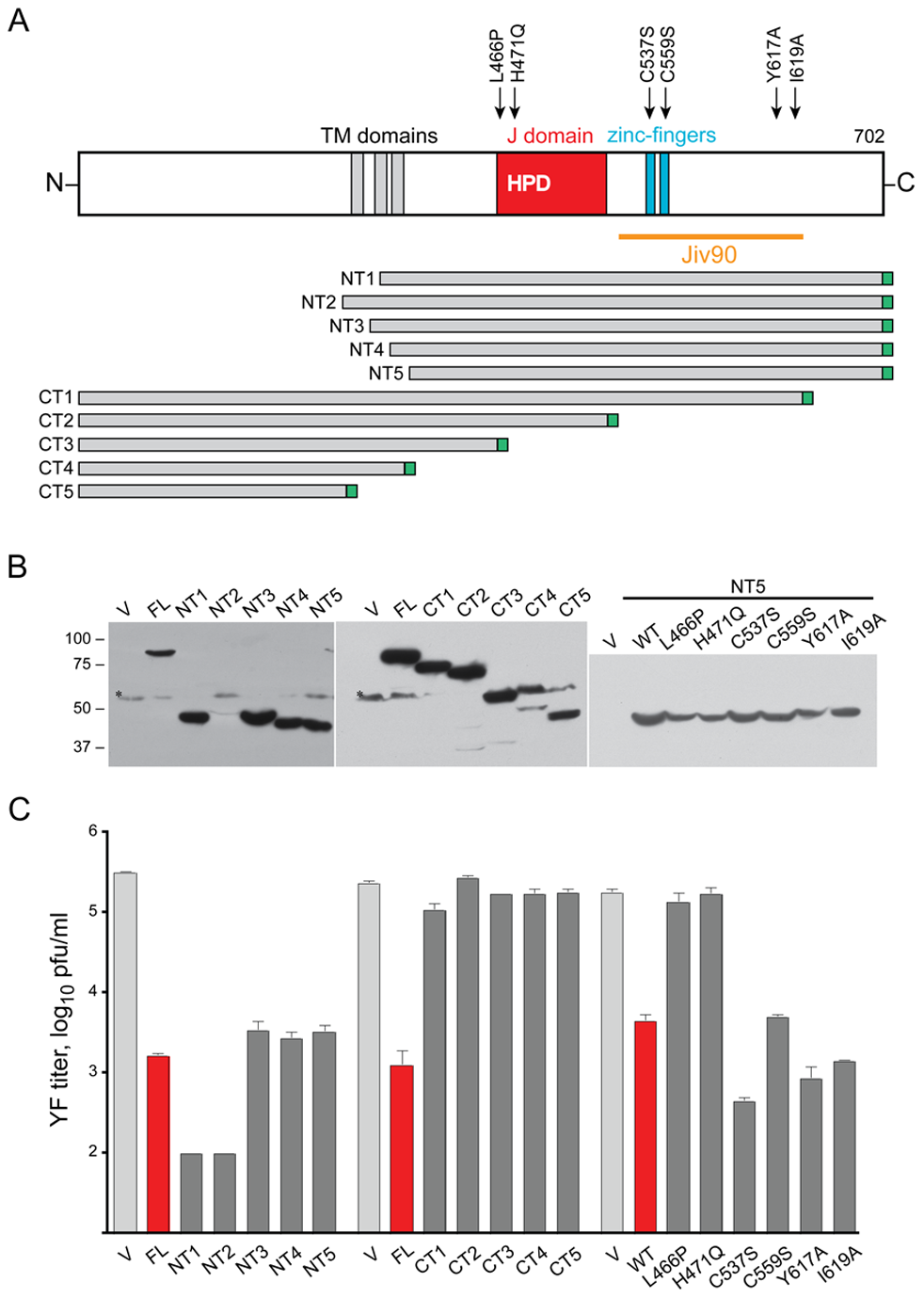 Mutagenesis of DNAJC14.