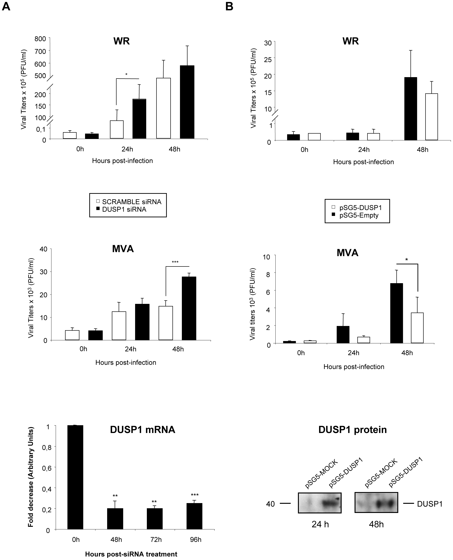 The increased VACV replication in cultured cells is DUSP1 specific.