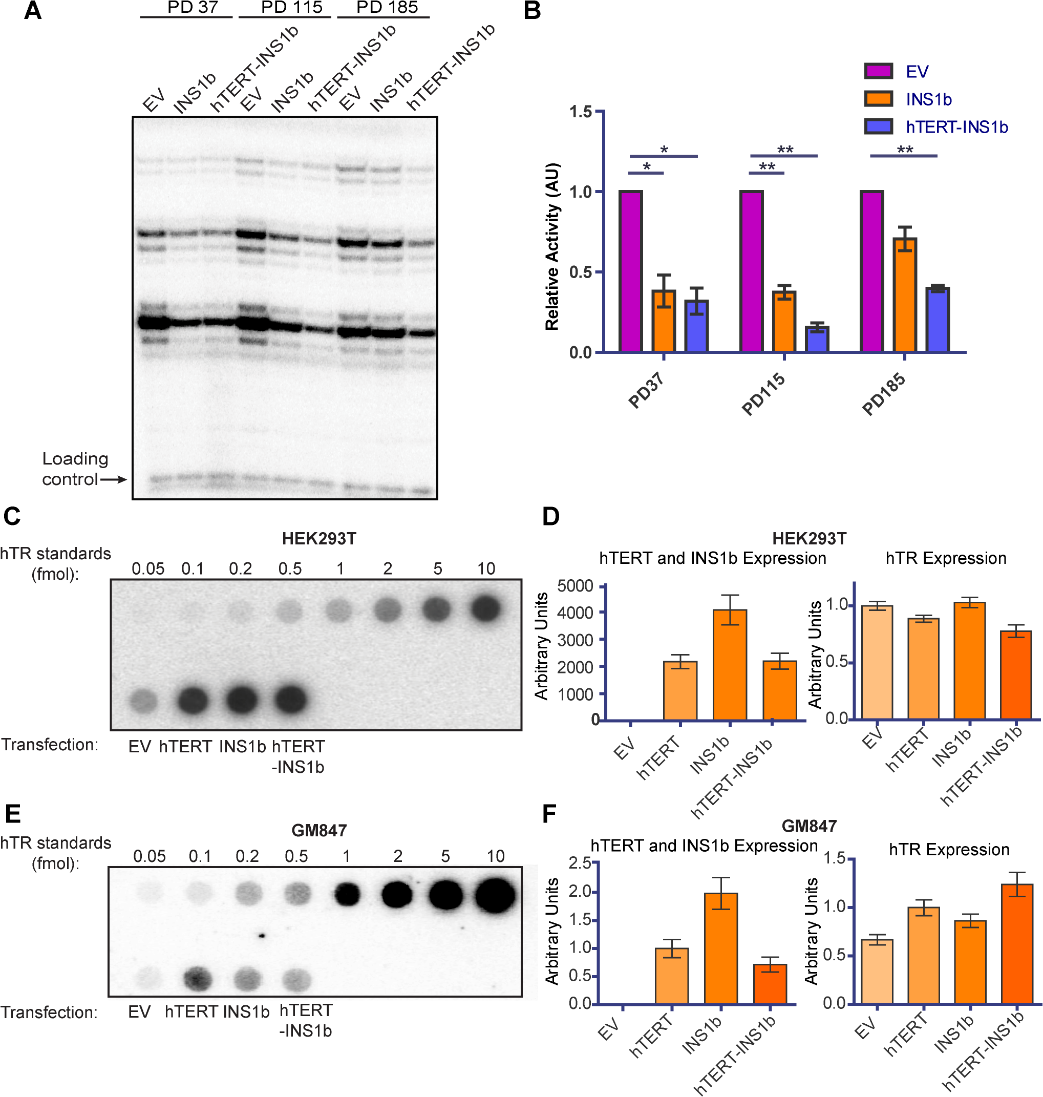 INS1b binds hTR and results in reduced telomerase activity.
