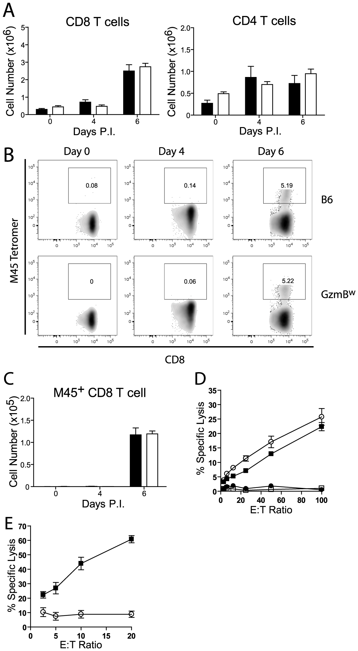 GzmB<sup>W/W</sup> CD8 T cells are unable to lyse MCMV infected cells.
