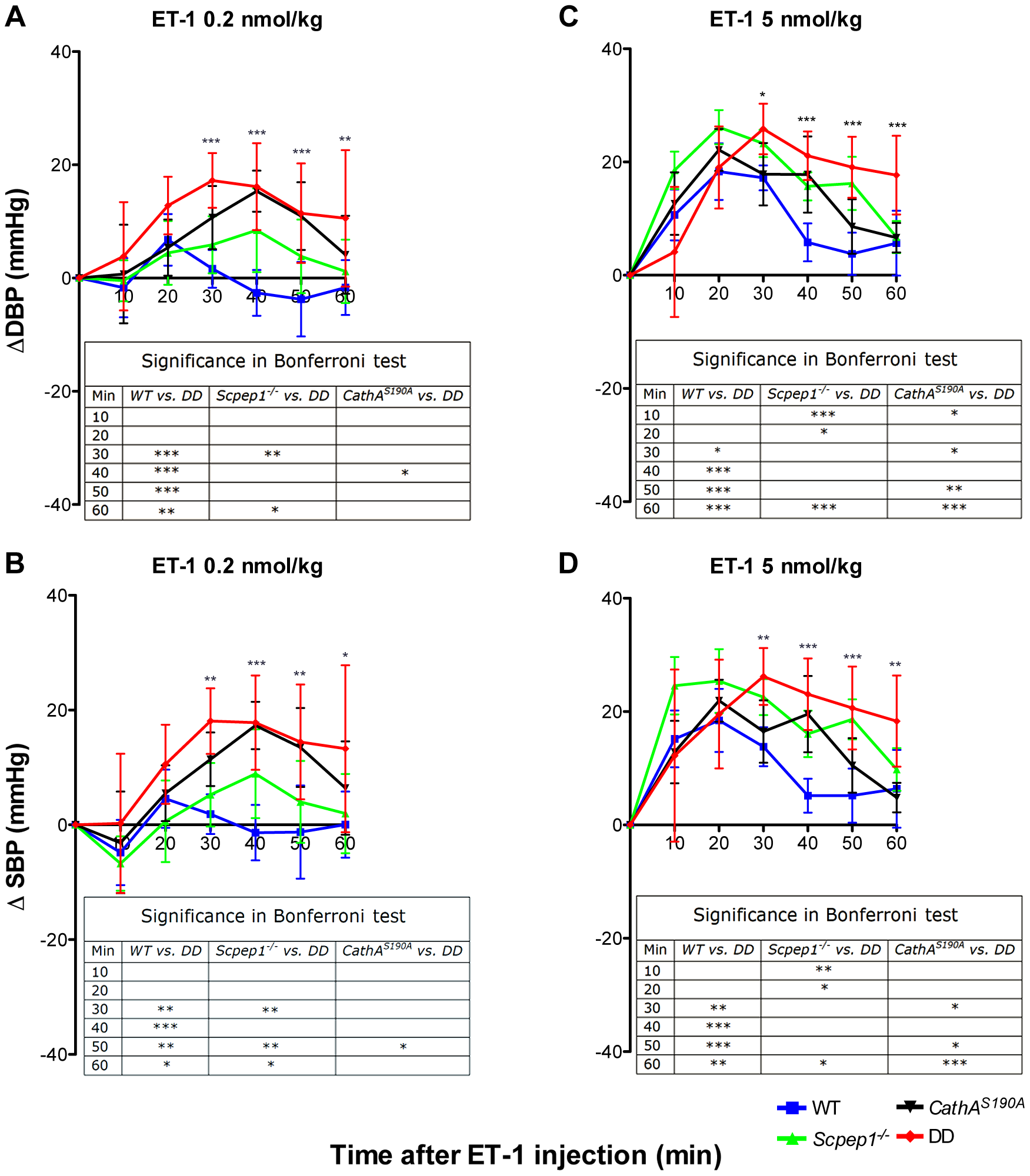 Mice with combined CathA/Scpep1 deficiency show higher increase in BP in response to systemic injection of ET-1.