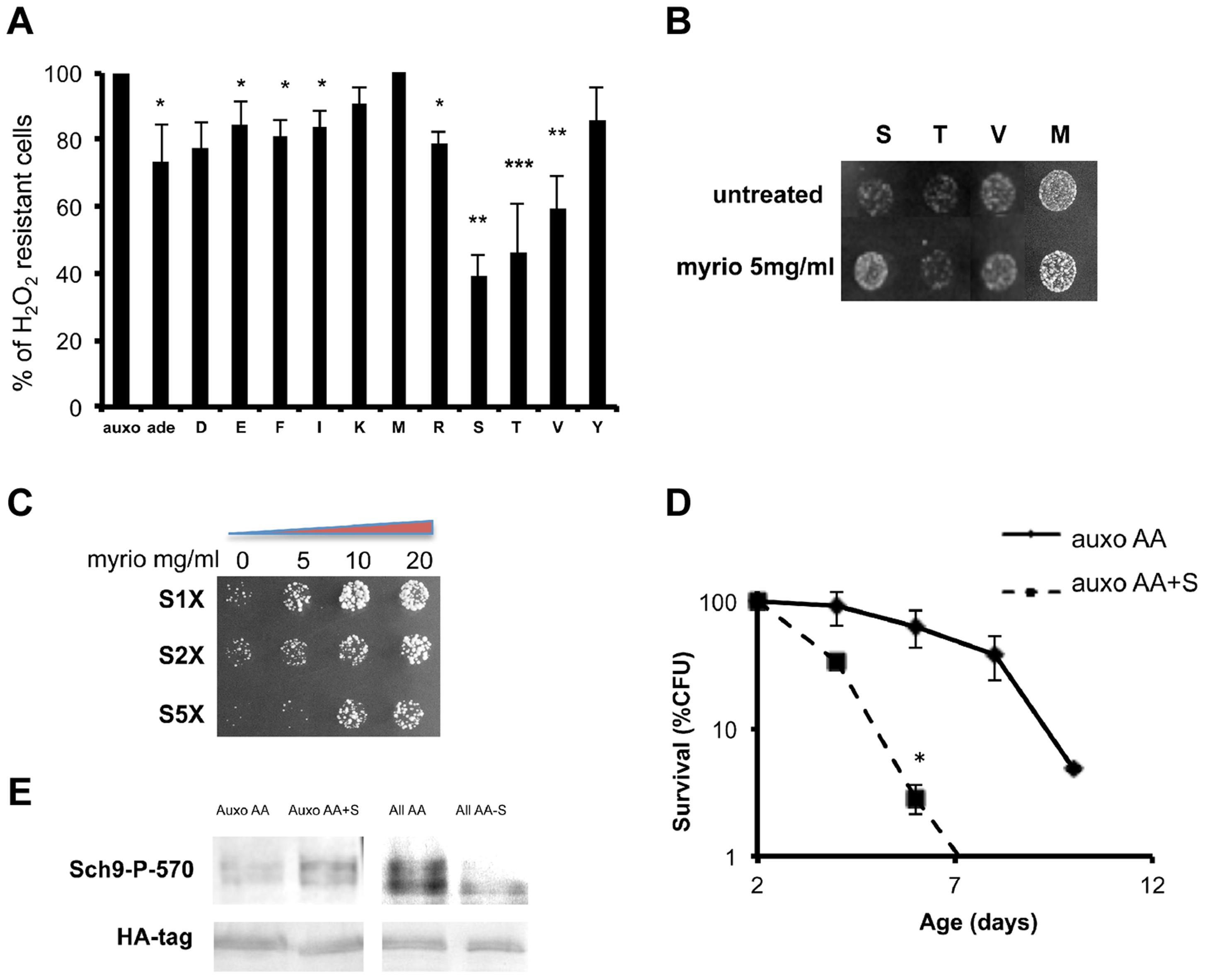 Role of single amino acids in stress sensitization.