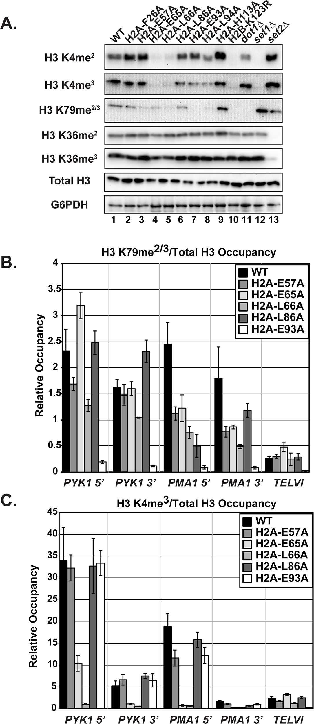 The H2A substitutions differentially affect H3 methylation.