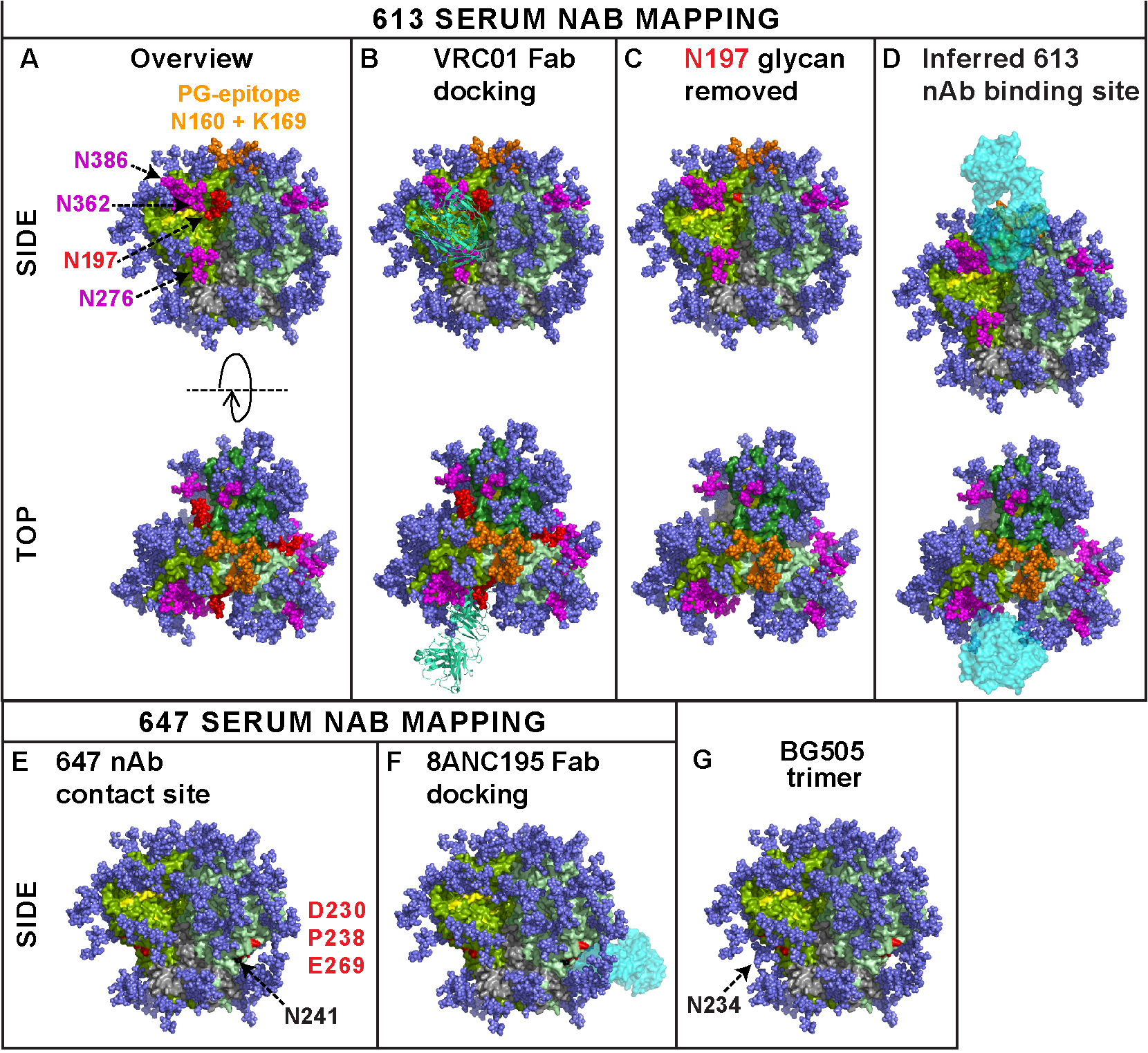 Modeling the epitope footprints of neutralizing sera 613 and 647.