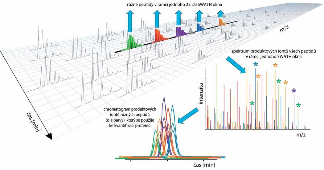 Princip metody SWATH/HRM. Metoda je založená na kvantifikaci produktových iontů vzniklých fragmentací všech prekurzorových iontů (peptidů) v tzv. SWATH oknech. SWATH okna jsou úseky škály <em>m/z</em> nejčastěji o šířce 25 Da (např. při zvoleném hmotnostním rozsahu <em>m/z</em> = 400–1 100 Da se postupně měří 28 SWATH oken v rámci jednoho cca 3 s trvajícího cyklu). Výsledkem měření každého SWATH okna je MS/MS spektrum na pravé straně obrázku. Chromatogram dole znázorňuje koeluci produktových iontů různých peptidů znázorněných různými barvami. Data z chromatogramu se poté využijí ke kvantifikaci peptidů a proteinů ve vzorku. Zdroj: ABSCIEX, se svolením, upraveno dle [27].