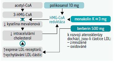 Schéma 2. Společný synergický efekt jednotlivých složek přípravku ArmoLIPID PLUS na snížení LDL-C